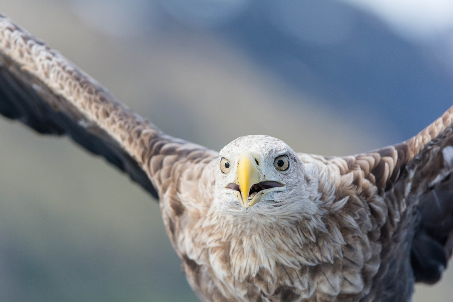Best time for Sea Eagle Safari in Norway