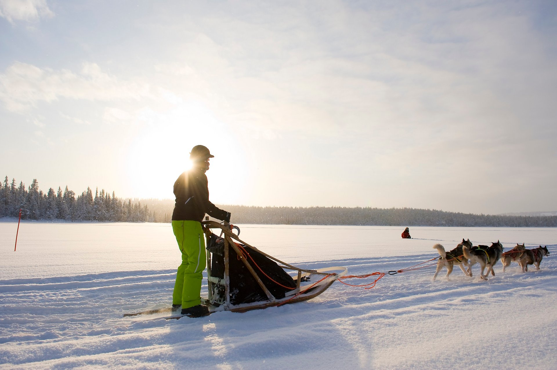Dog Sledding in Finland 2020 - Best Time