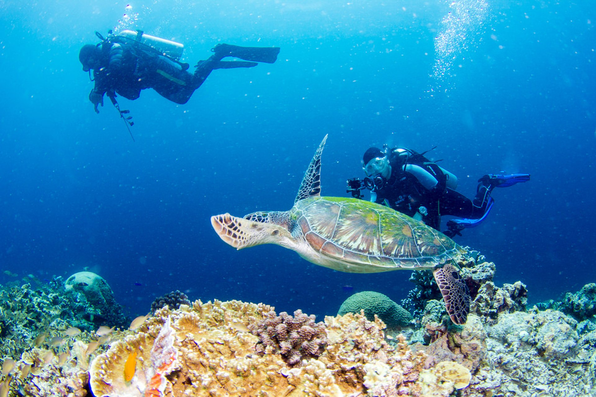 Snorkelling and Scuba Diving in Philippines - Best Season 2020