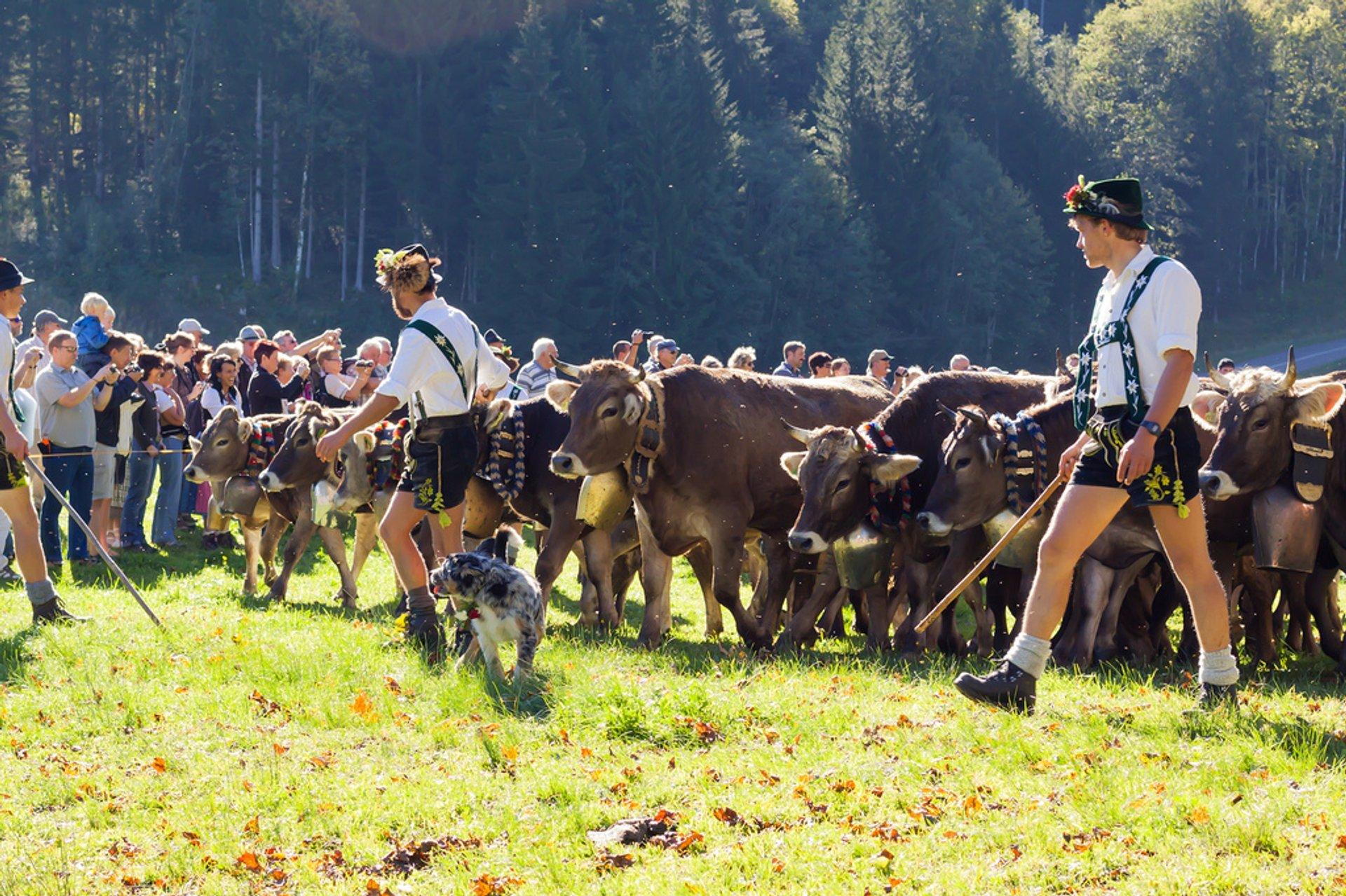 Best time for Viehscheid in Bavaria 2019