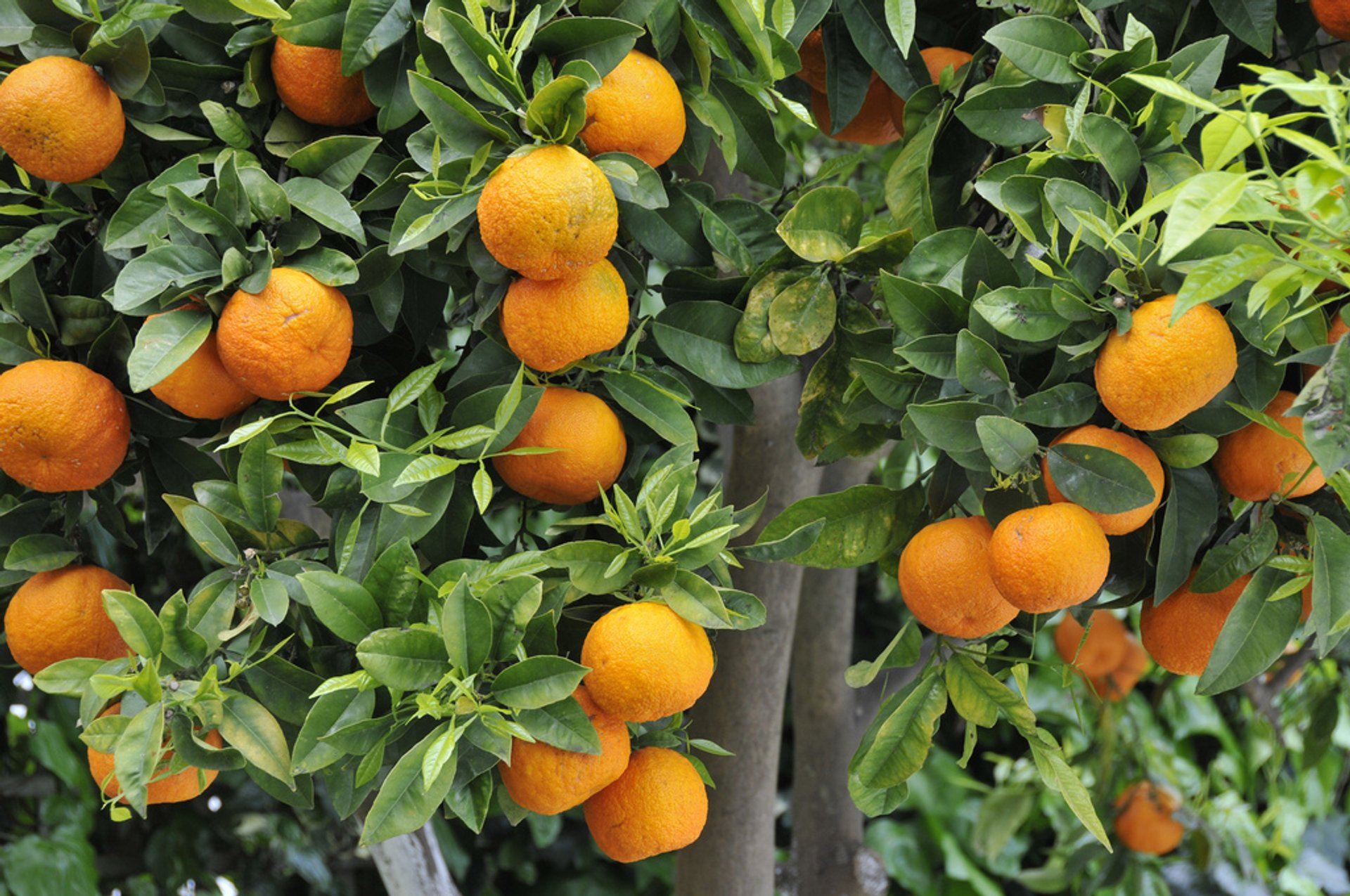 Lemon and Orange Season in Crete - Best Season 2020