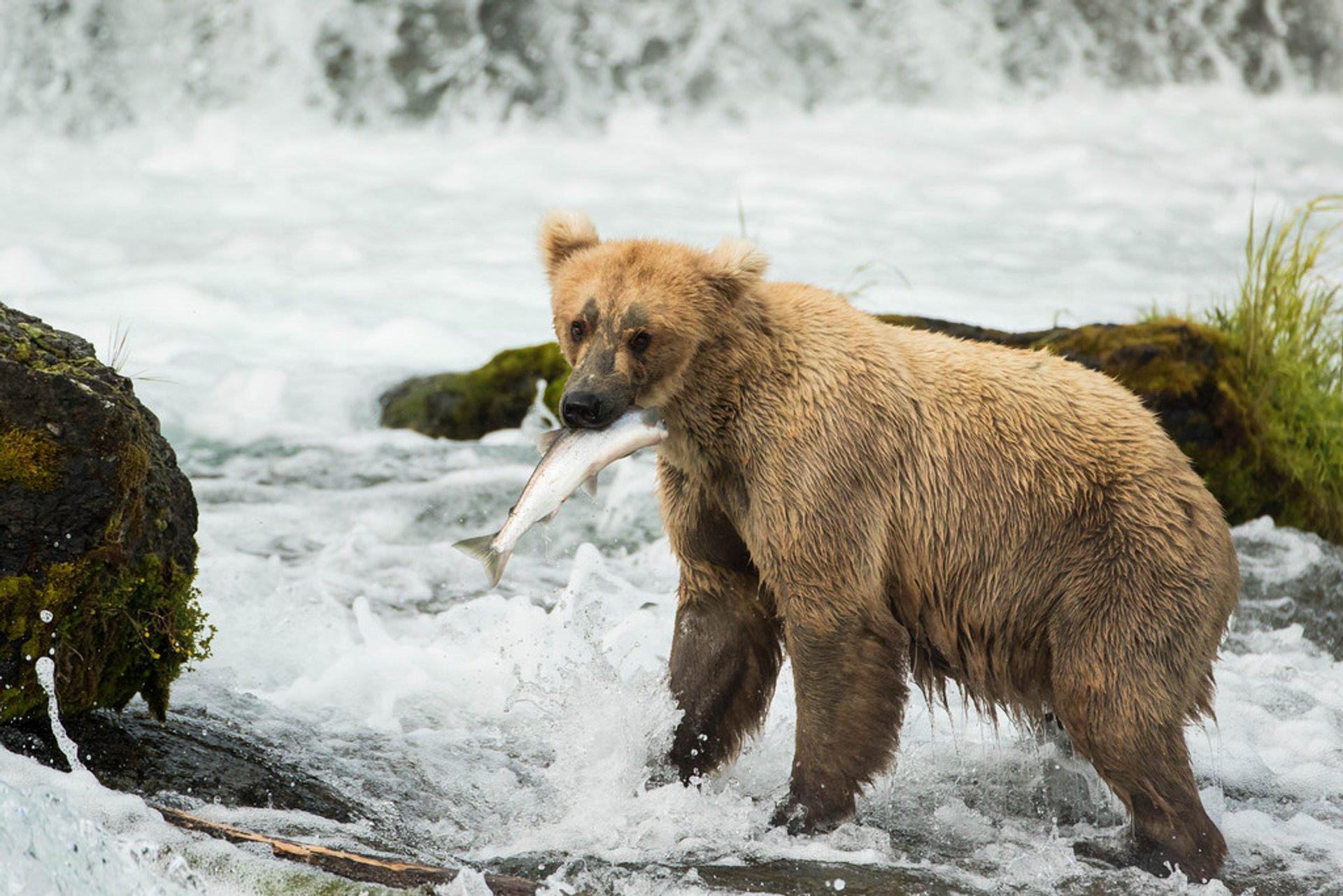 Katmai National Park & Preserve 2020