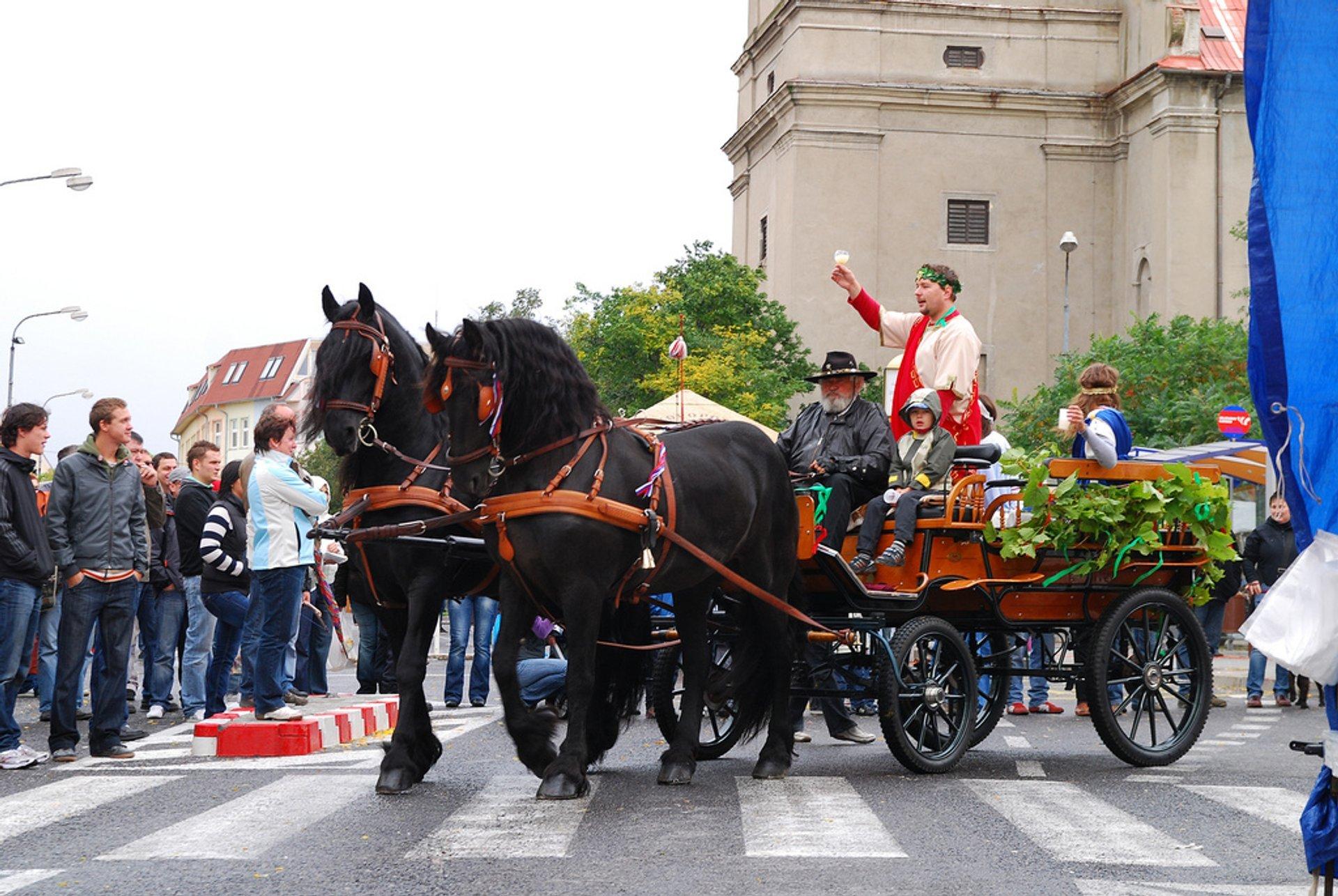 Wine Season in Slovakia - Best Time