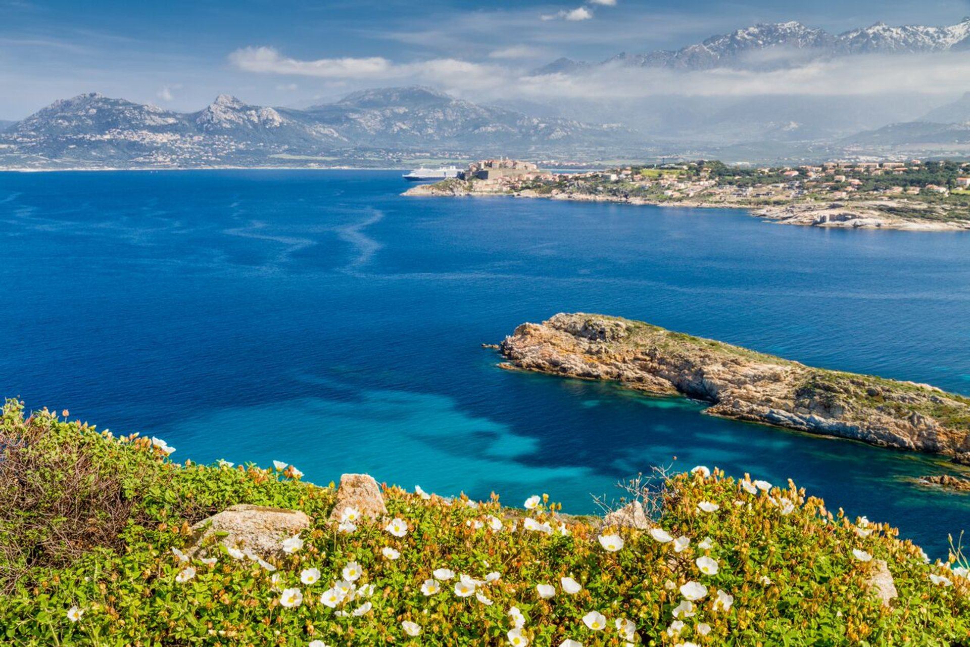 Best time to see Wildflowers in Bloom in Corsica 2020