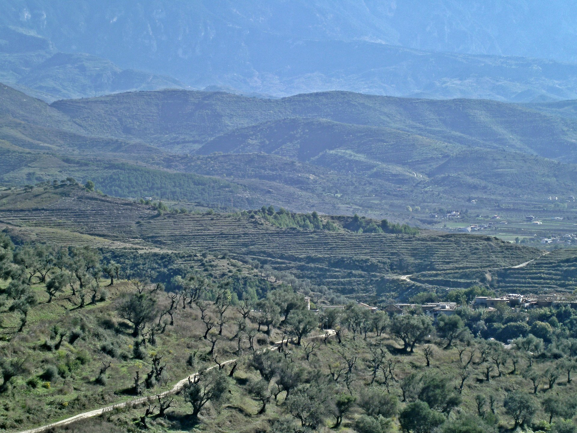 Olive groves and mountains, Berat, Albania 2020