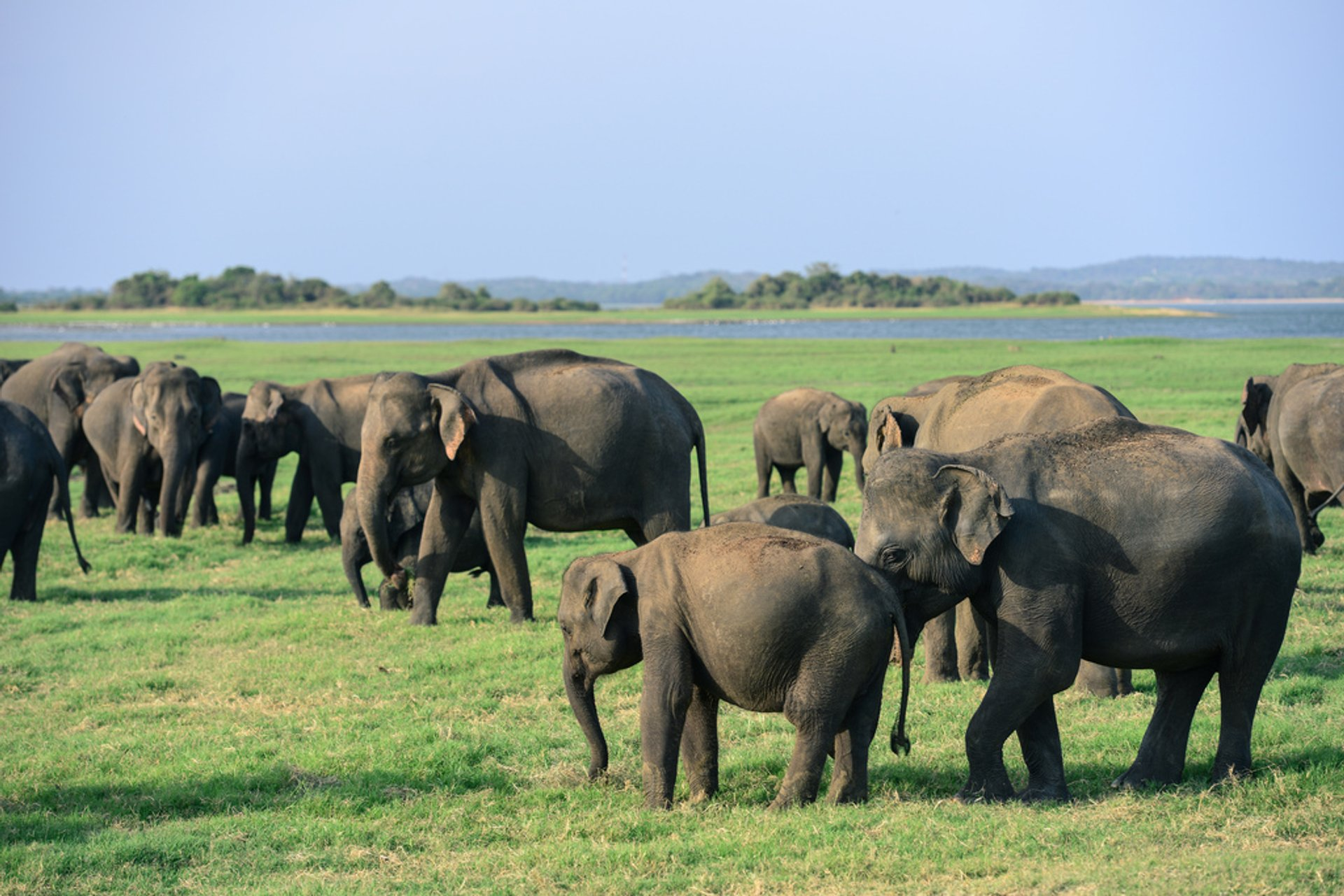 Elephant Gathering in Sri Lanka - Best Time