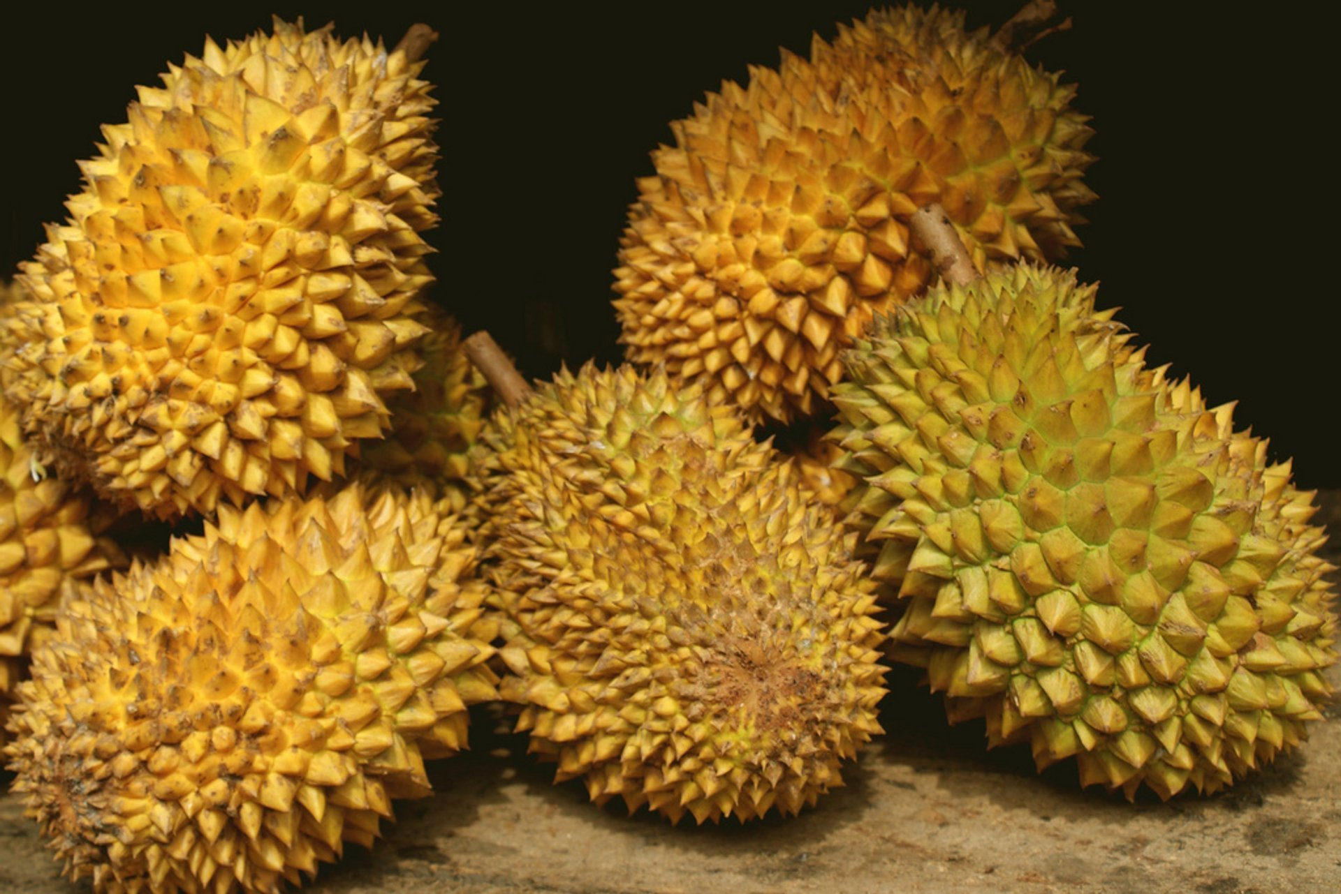 Durian in Sri Lanka 2020 - Best Time