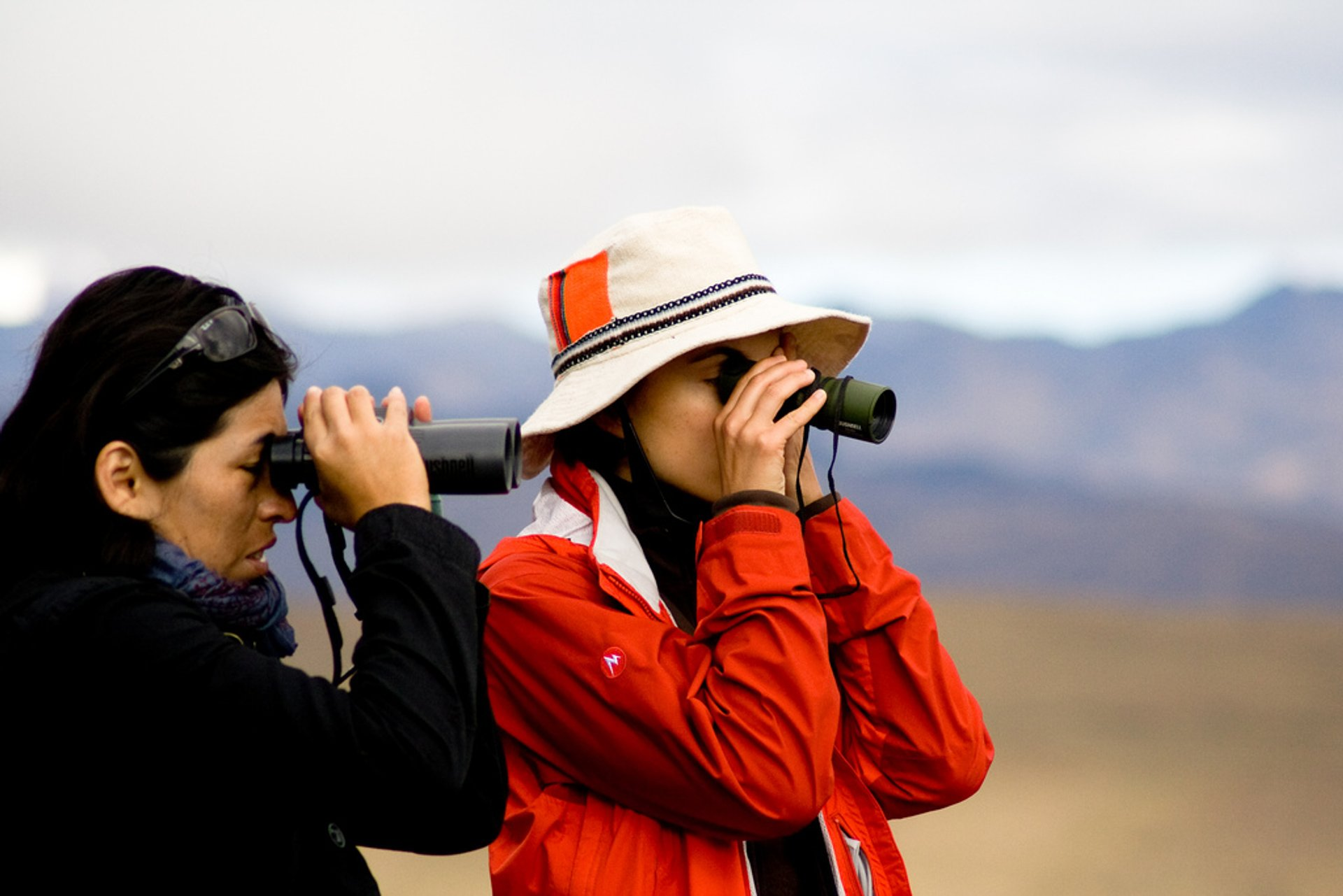 Birdwatching in Peru 2019 - Best Time