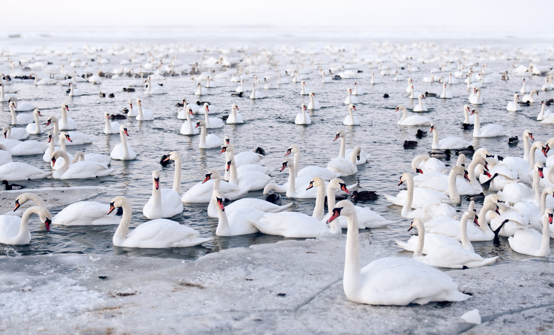 Birdwatching during Mass Bird Migration in Estonia 2020 - Best Time