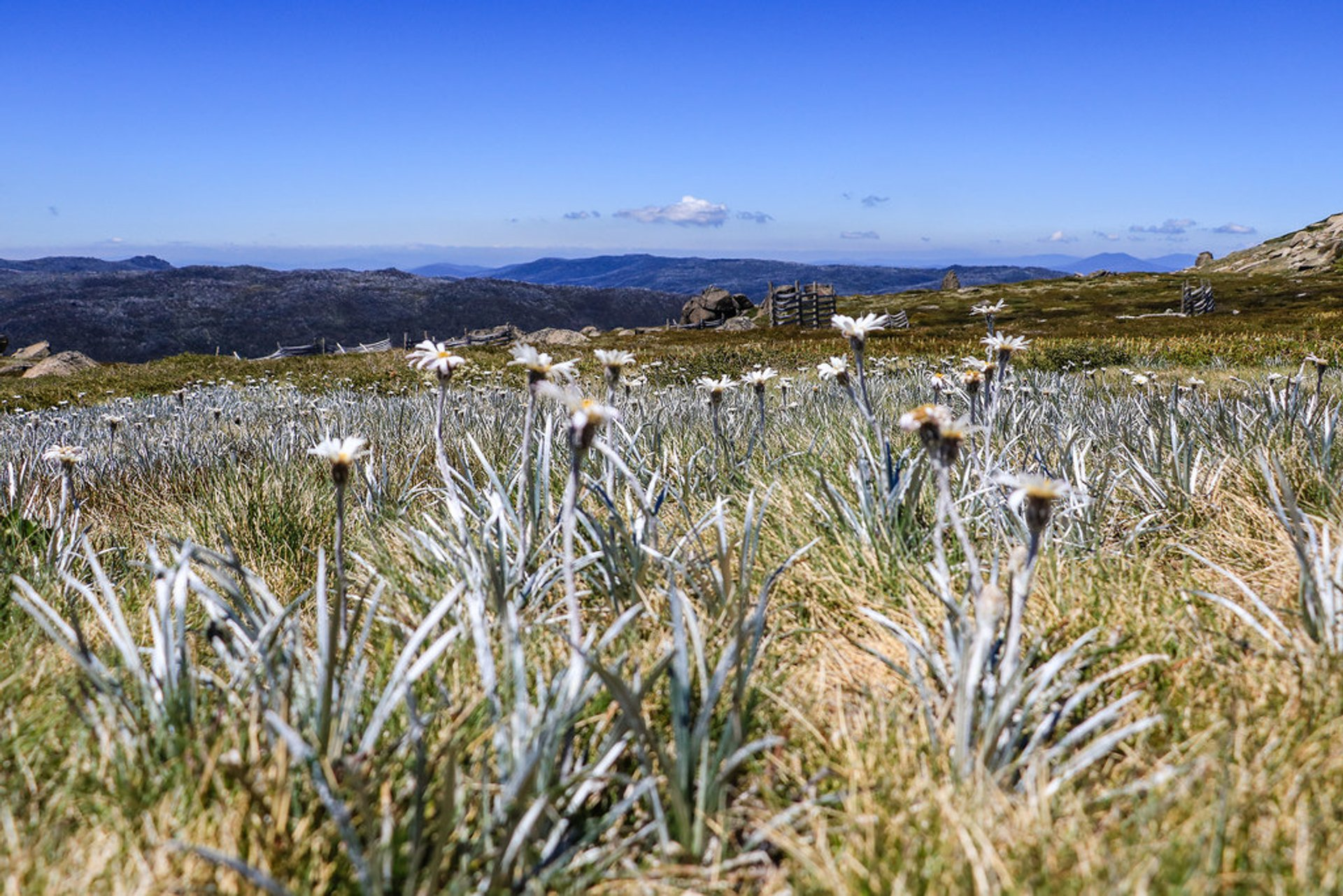Climbing Mount Kosciuszko in New South Wales - Best Season 2020