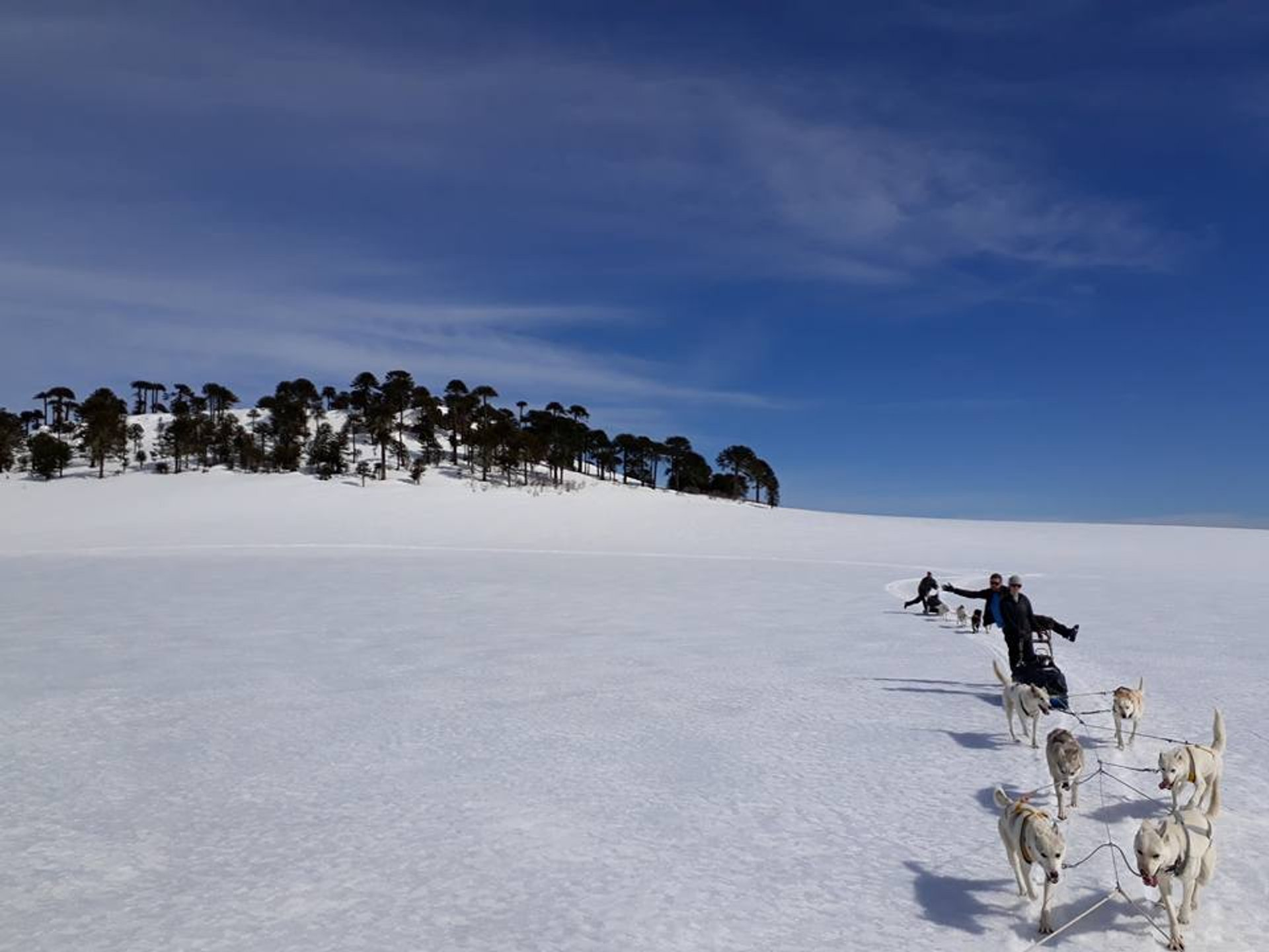 Dog Sledding in Patagonia - Best Season 2020