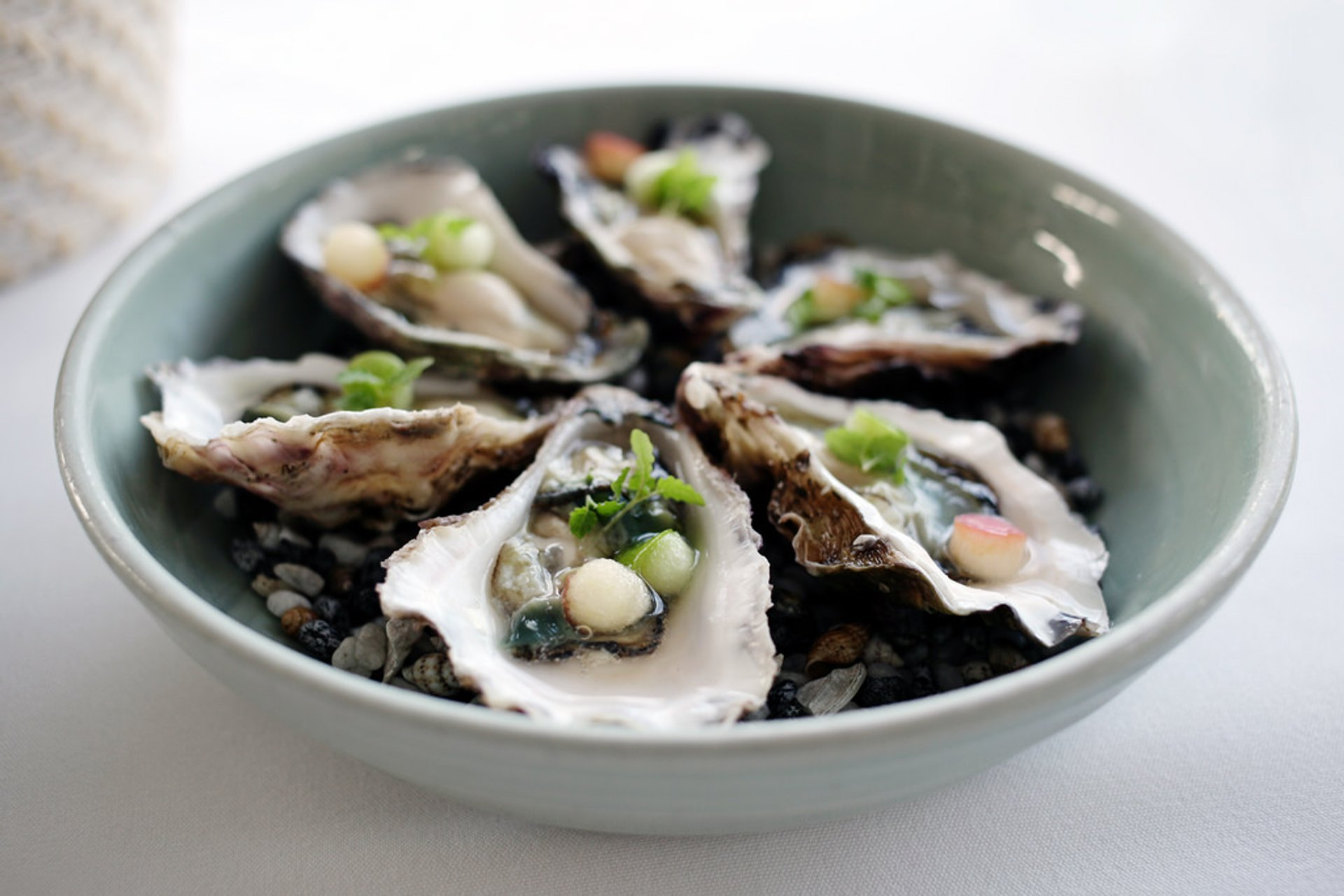 Sydney Rock Oyster in New South Wales - Best Time