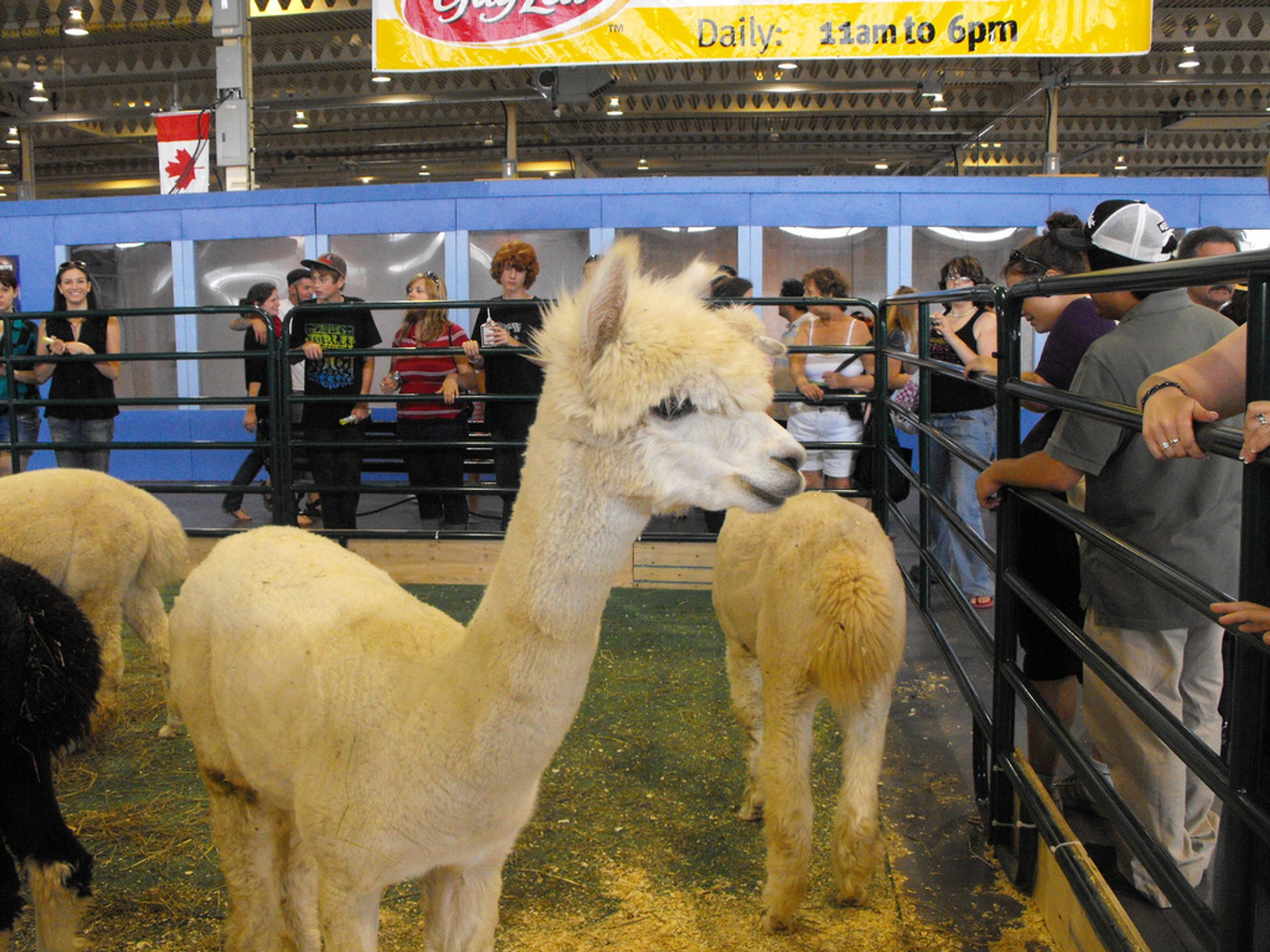 Best time to see Canadian National Exhibition  in Toronto 2020