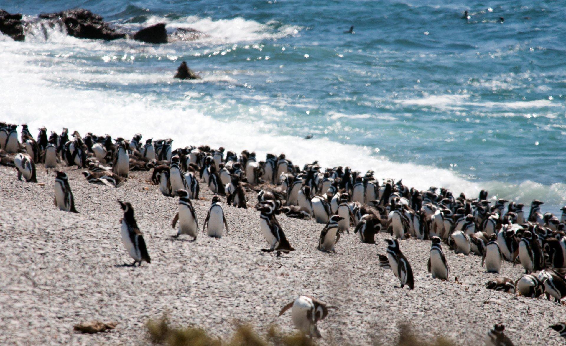 Penguins in Argentina 2019 - Best Time