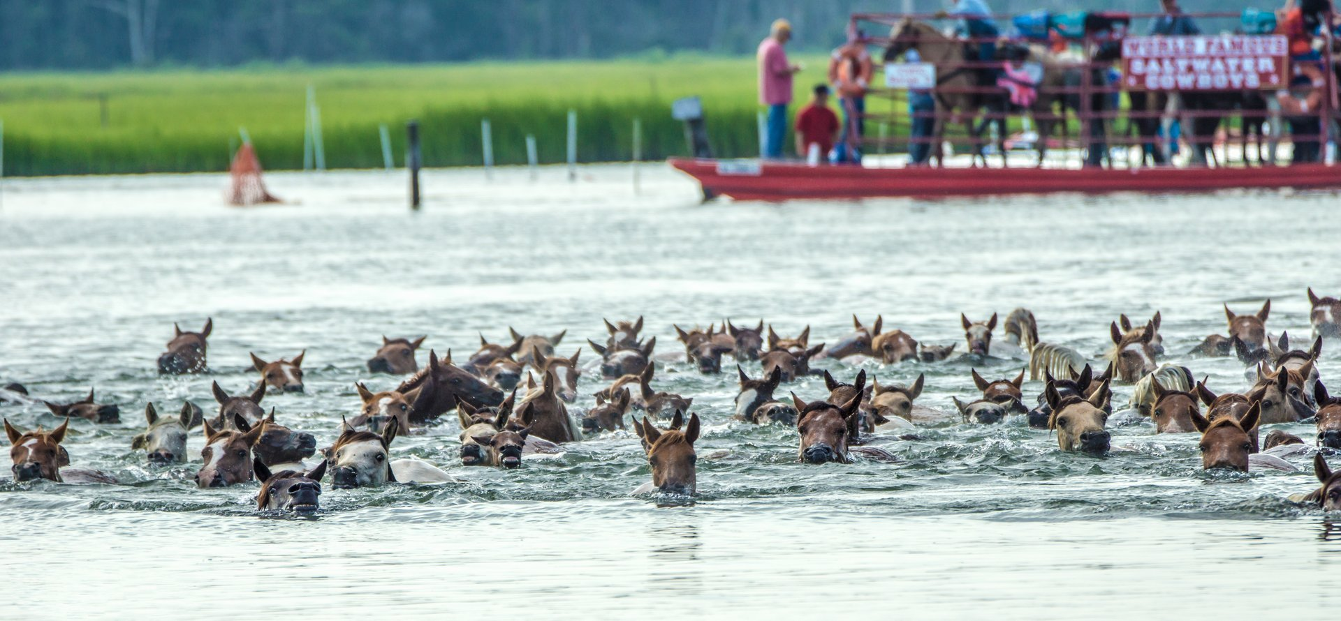 Best time for Chincoteague Pony Swim in Virginia 2020