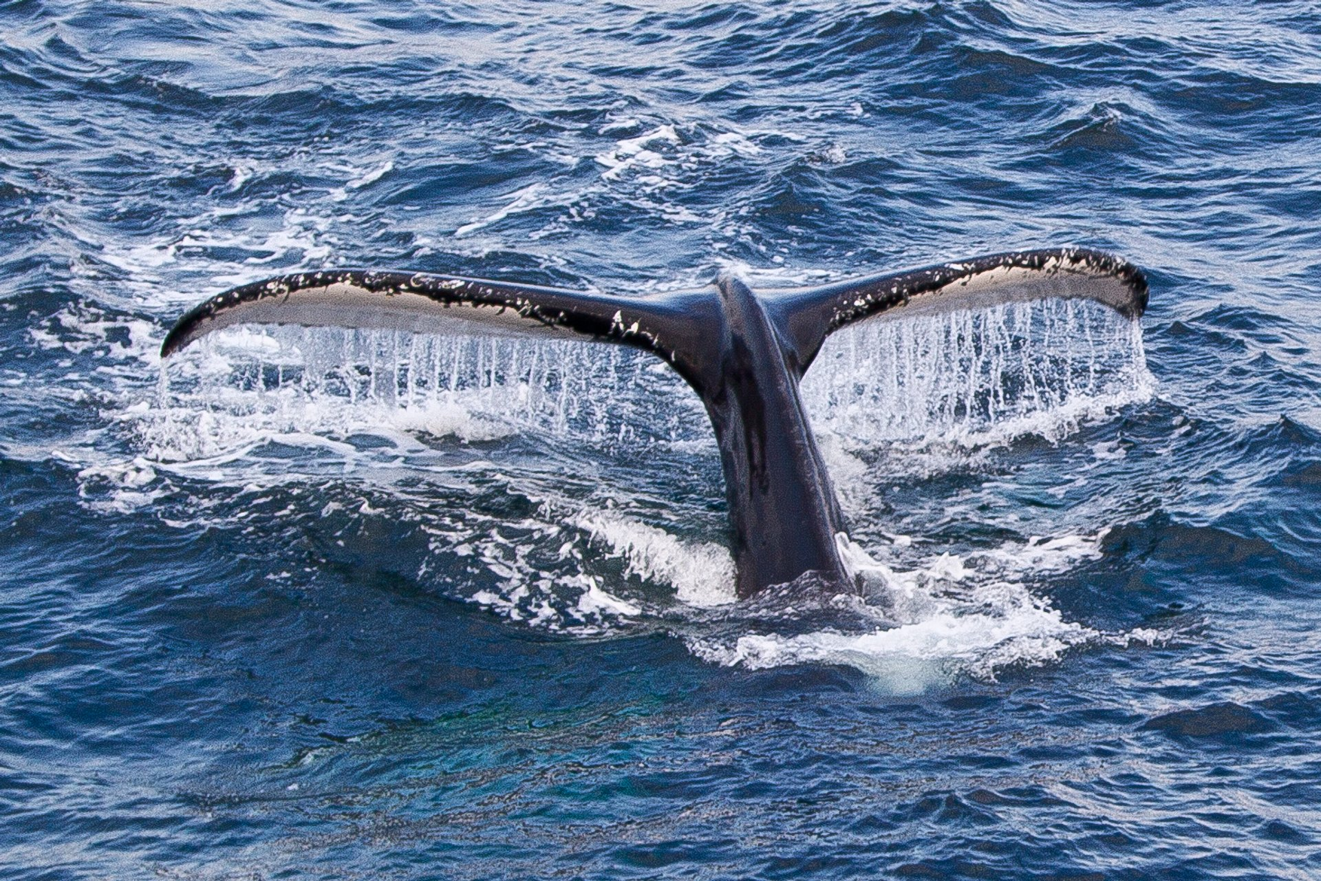 Whale Watching in Massachusetts - Best Season 2020