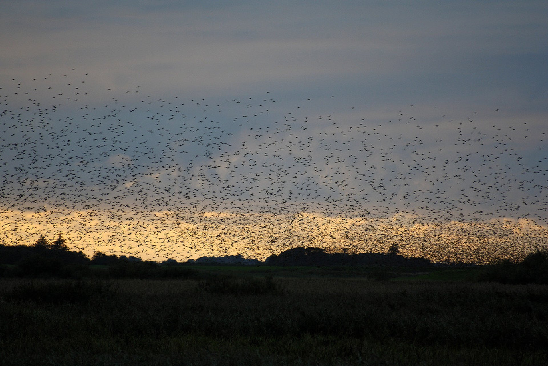 Best time for Black Sun or Starling Murmuration in Denmark 2020