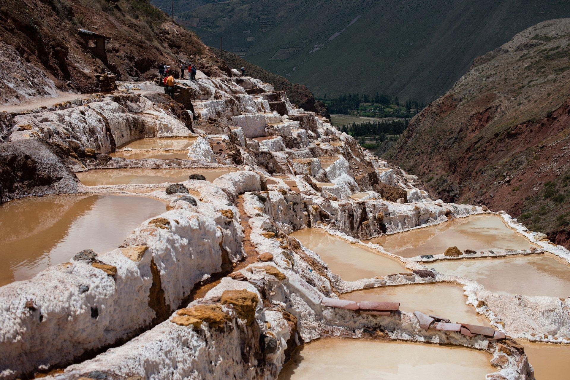 Salt Harvest at Salinas de Maras in Peru - Best Season 2020