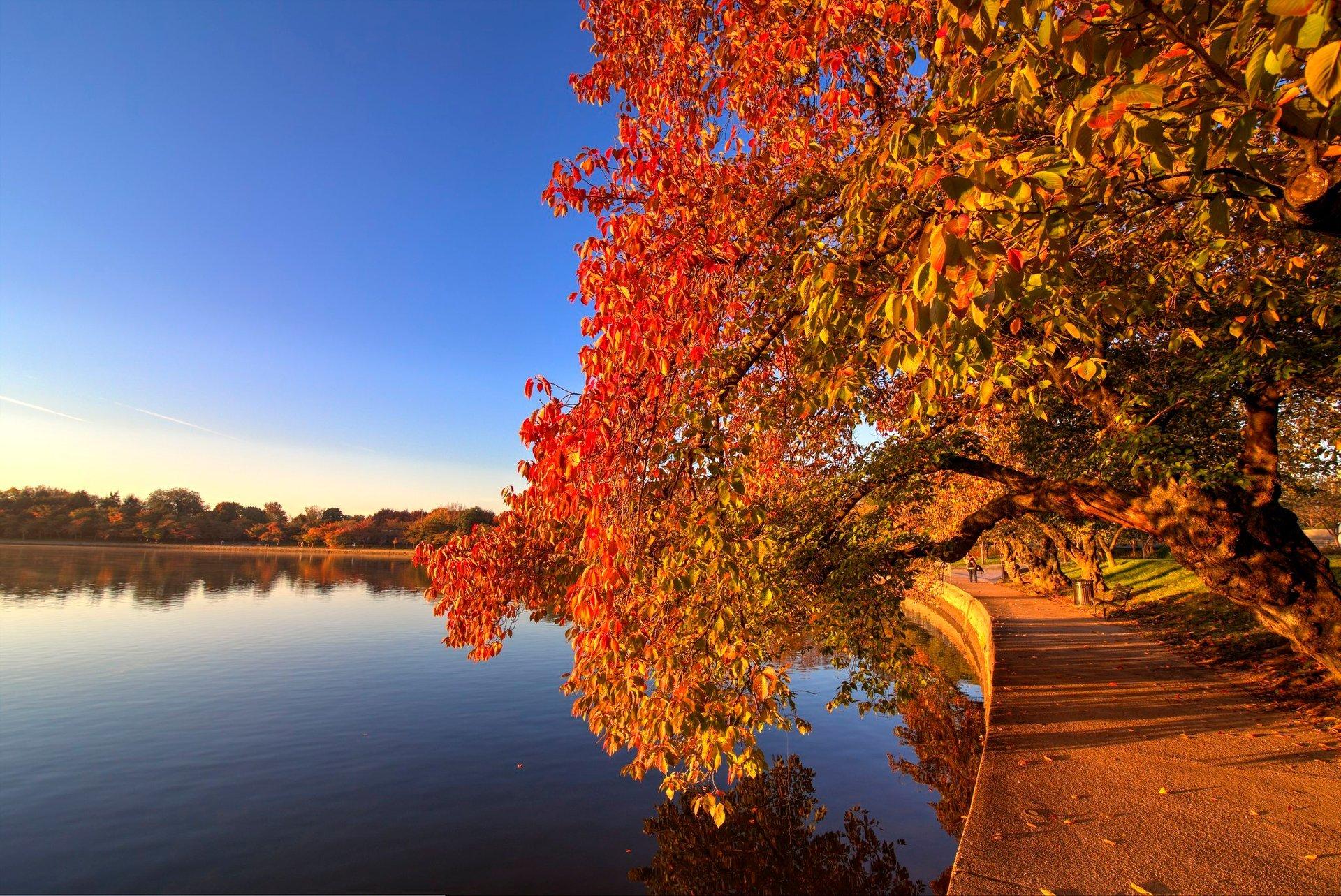 Fall Sunrise at the Tidal Basin 2020