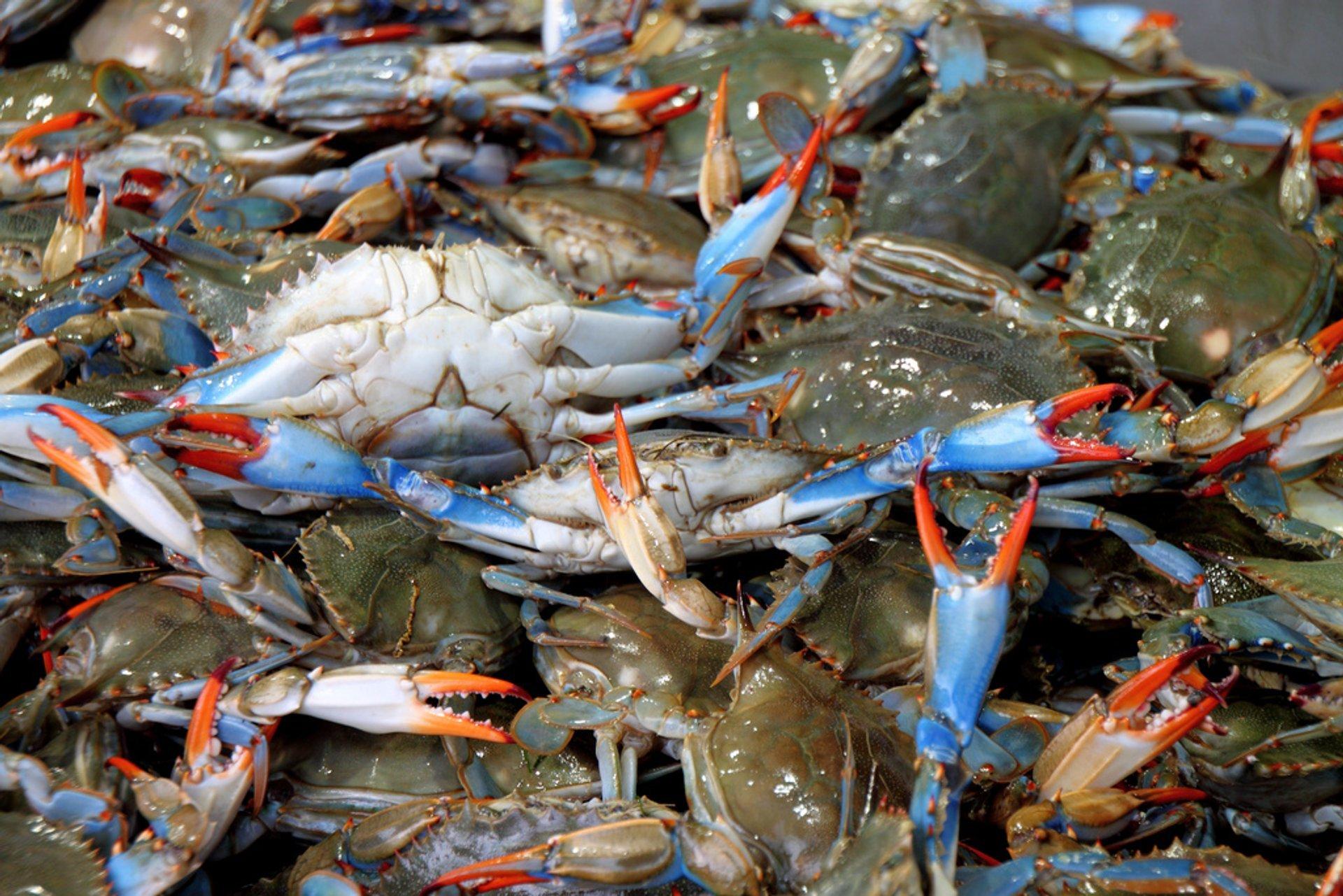 Chesapeake Bay Blue Crab in Washington, D.C. - Best Time
