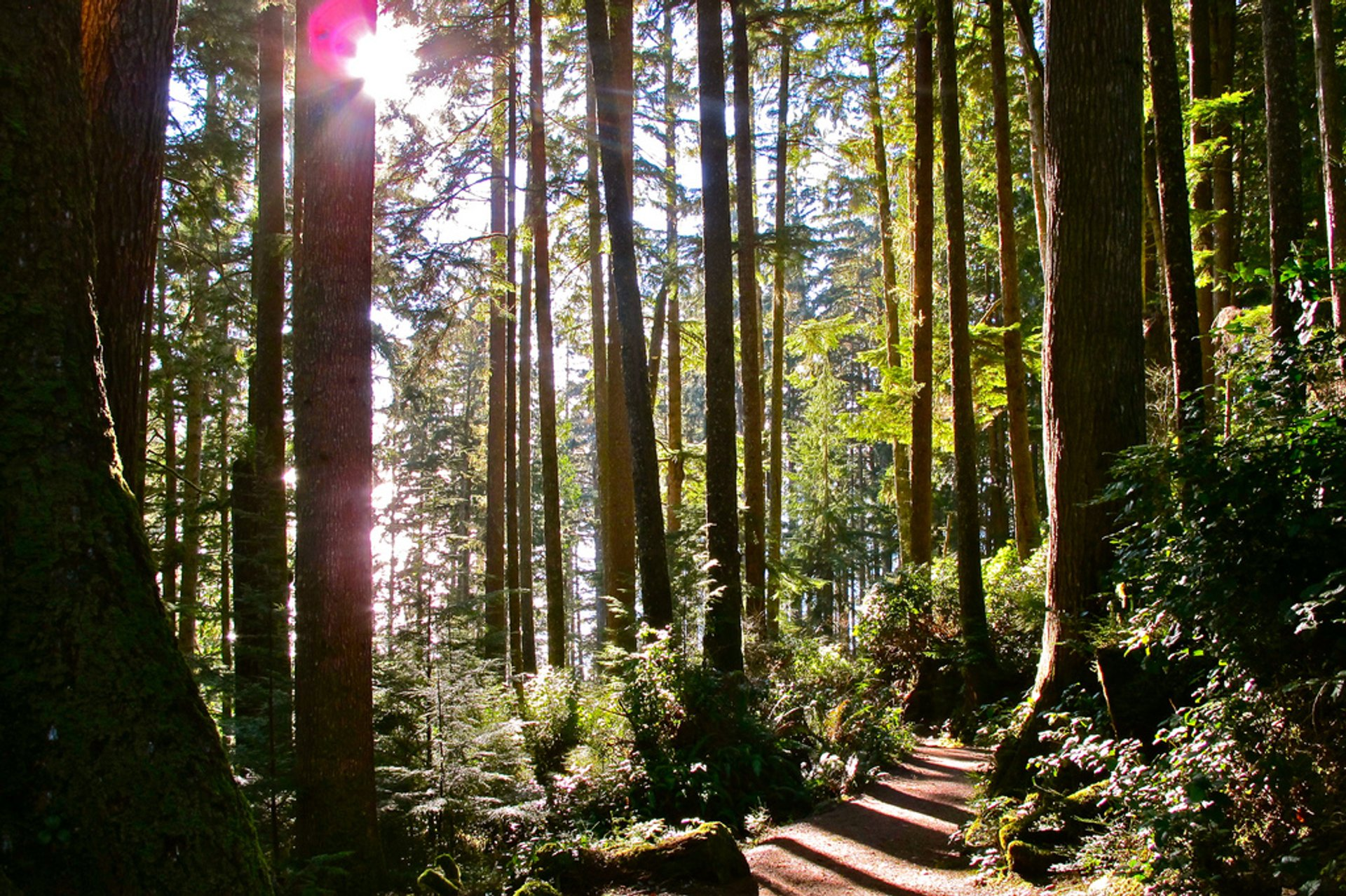 Forest along the Juan de Fuca trail near China Beach, Vancouver Island