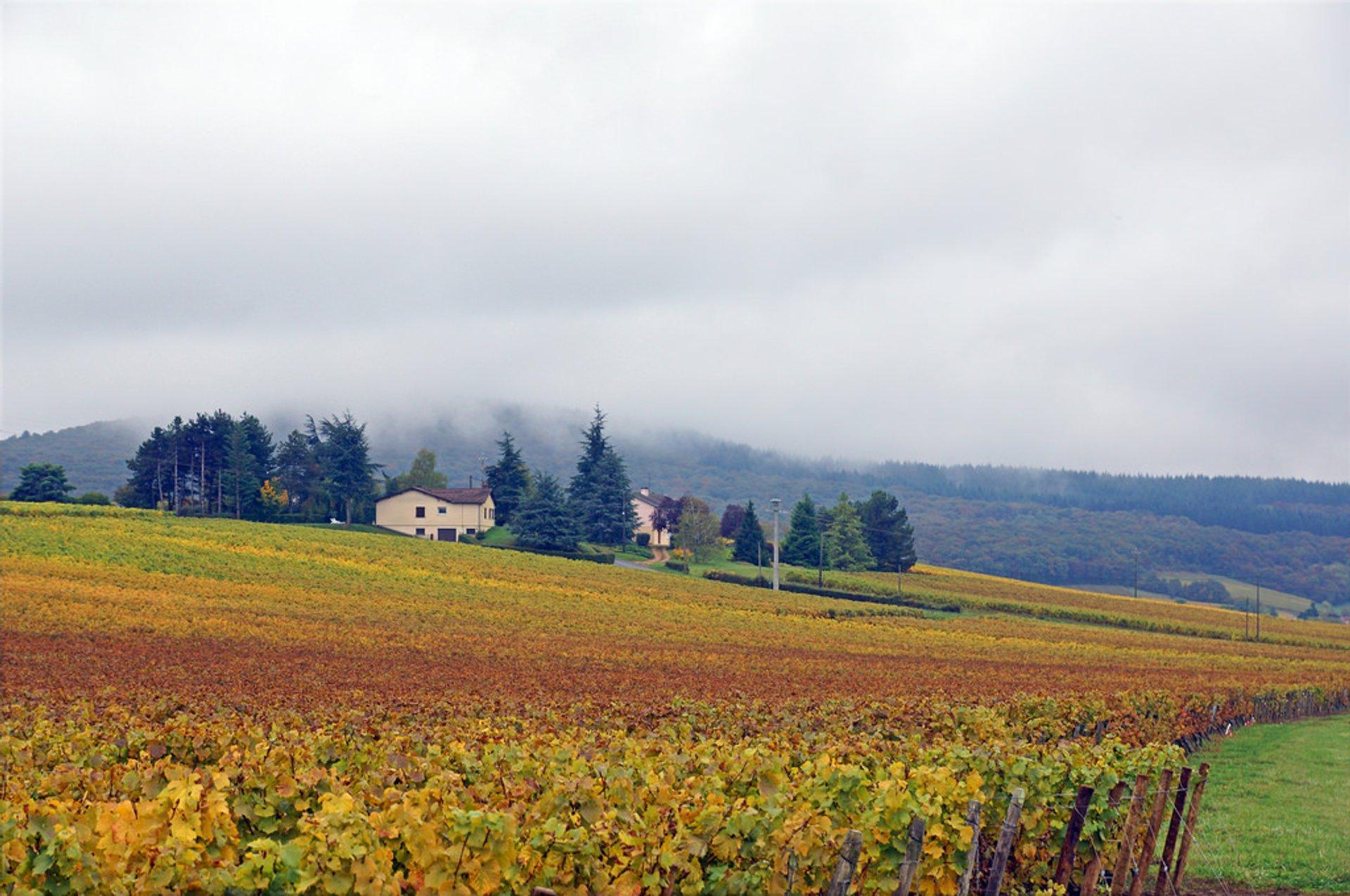 Collongette, Lugny 2020