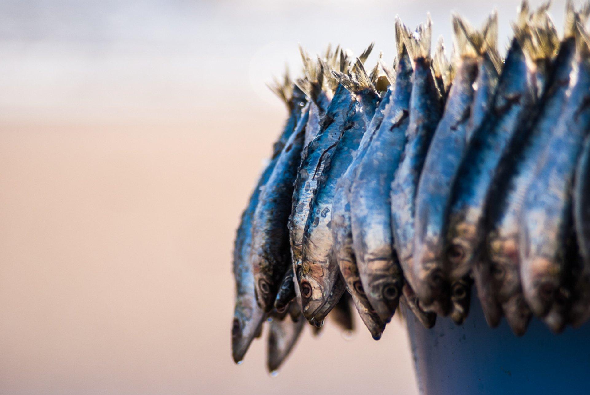 Sardine Season in Greece - Best Season 2020