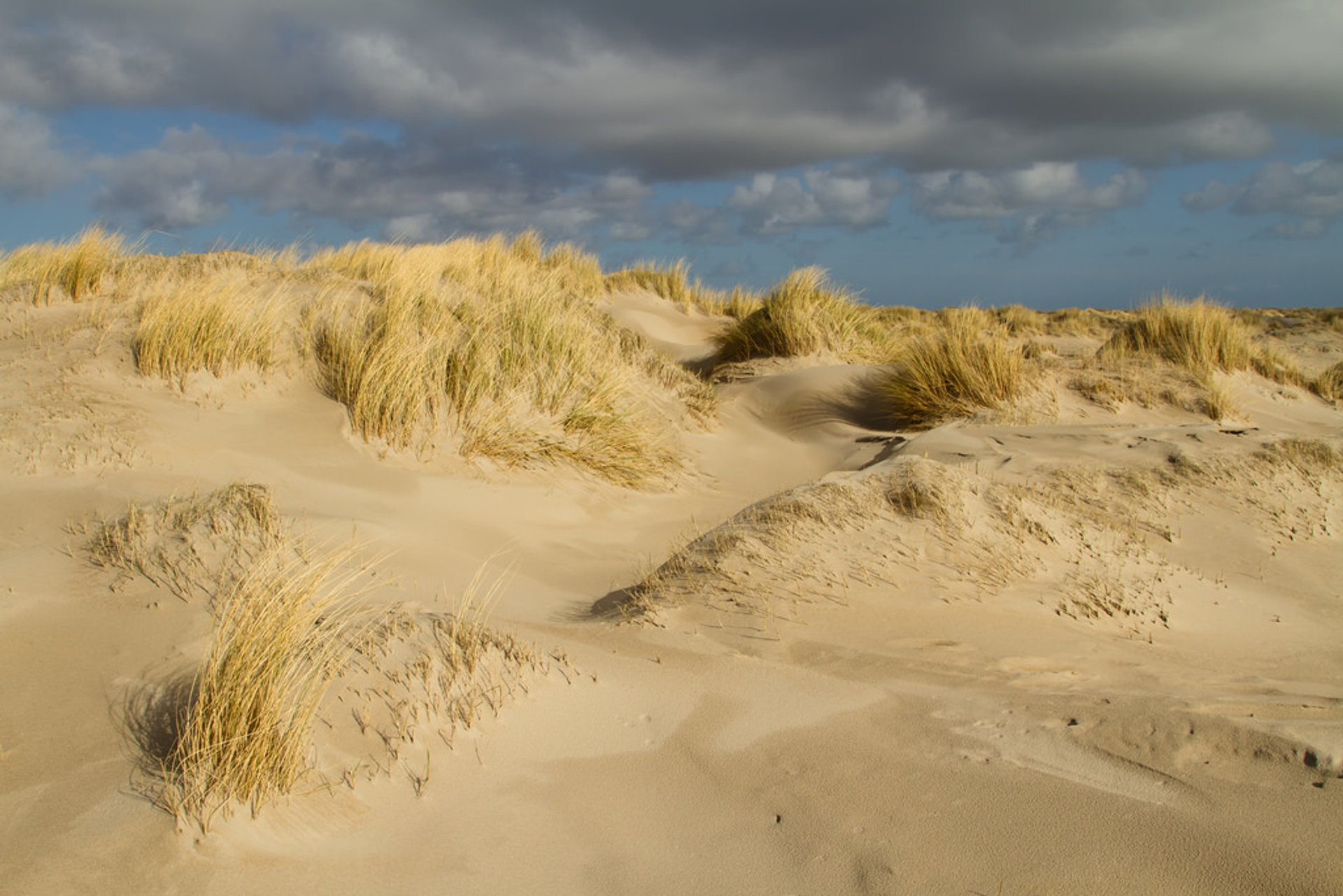 Best time for Dunes at Texel in The Netherlands 2020