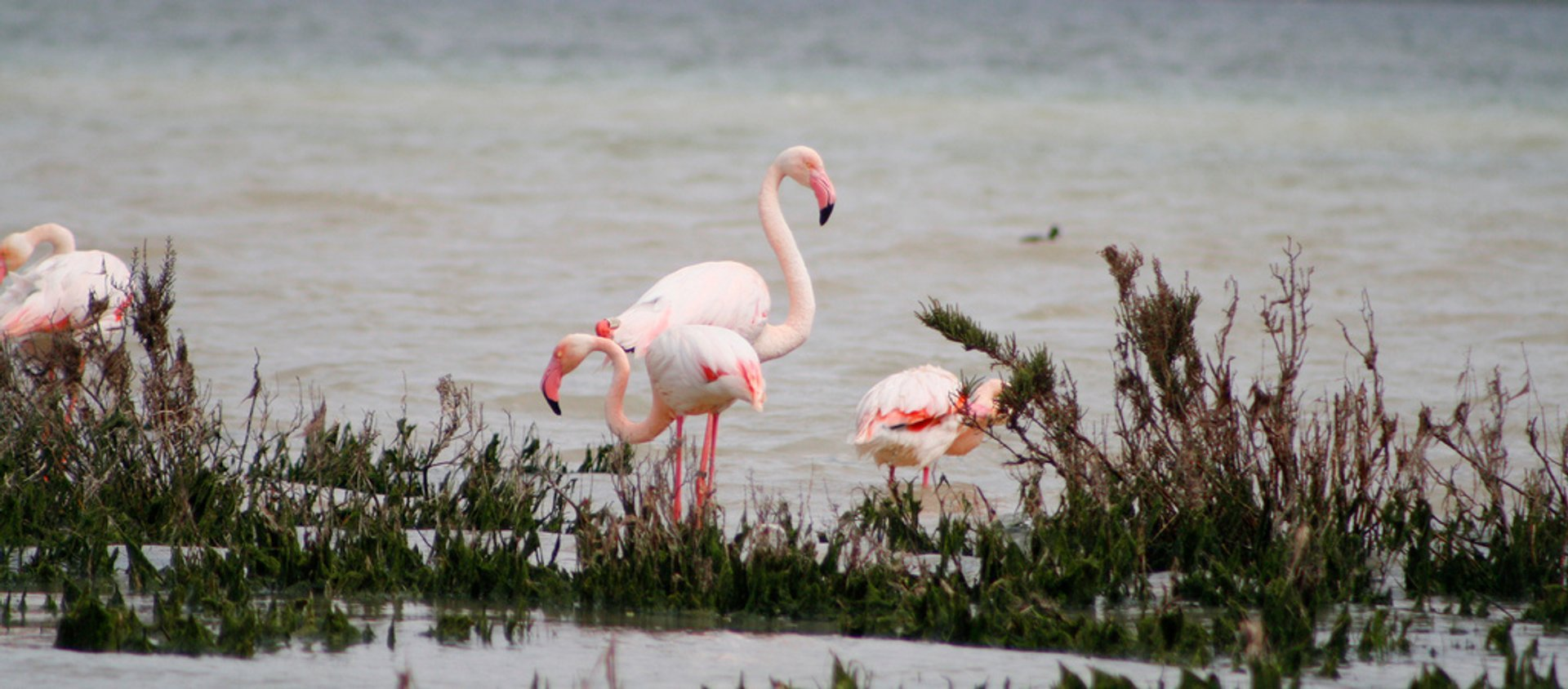 Best time for Fuente de Piedra Flamingos in Spain
