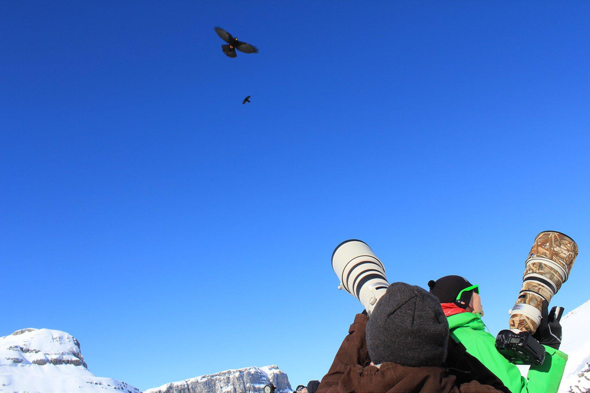 Birdwatching in Switzerland 2020 - Best Time