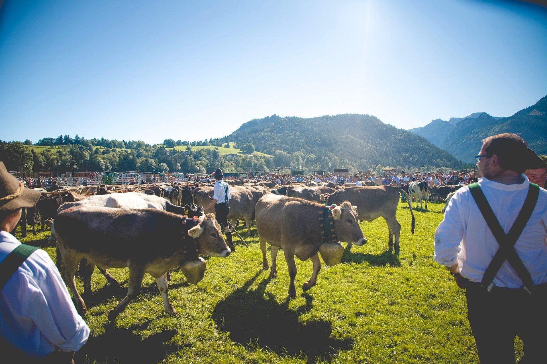 Best time to see Viehscheid in Bavaria 2020