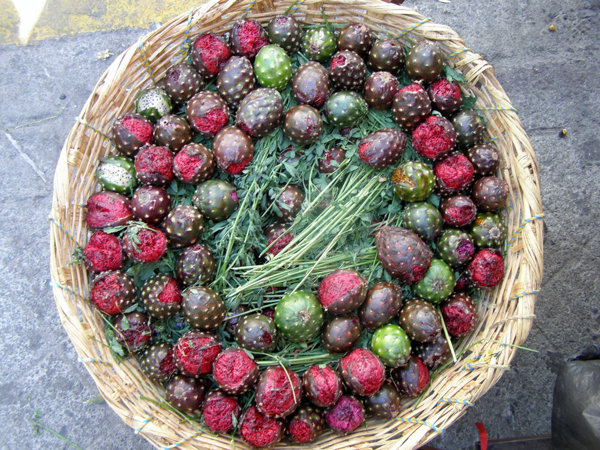 Best time to see Tuna (Prickly Pear) in Mexico 2020