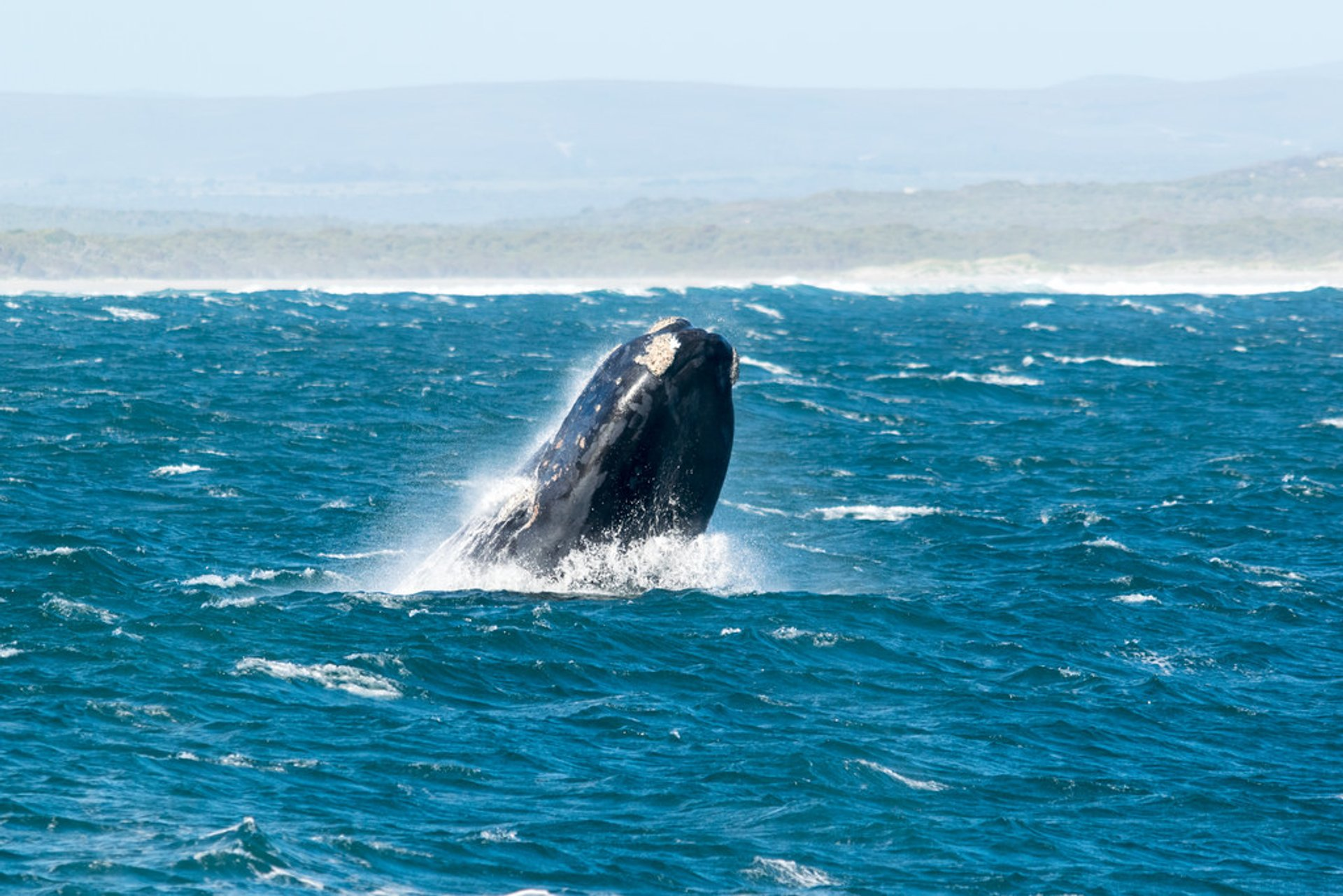 Land-Based Whale Watching in Cape Town 2019 - Best Time