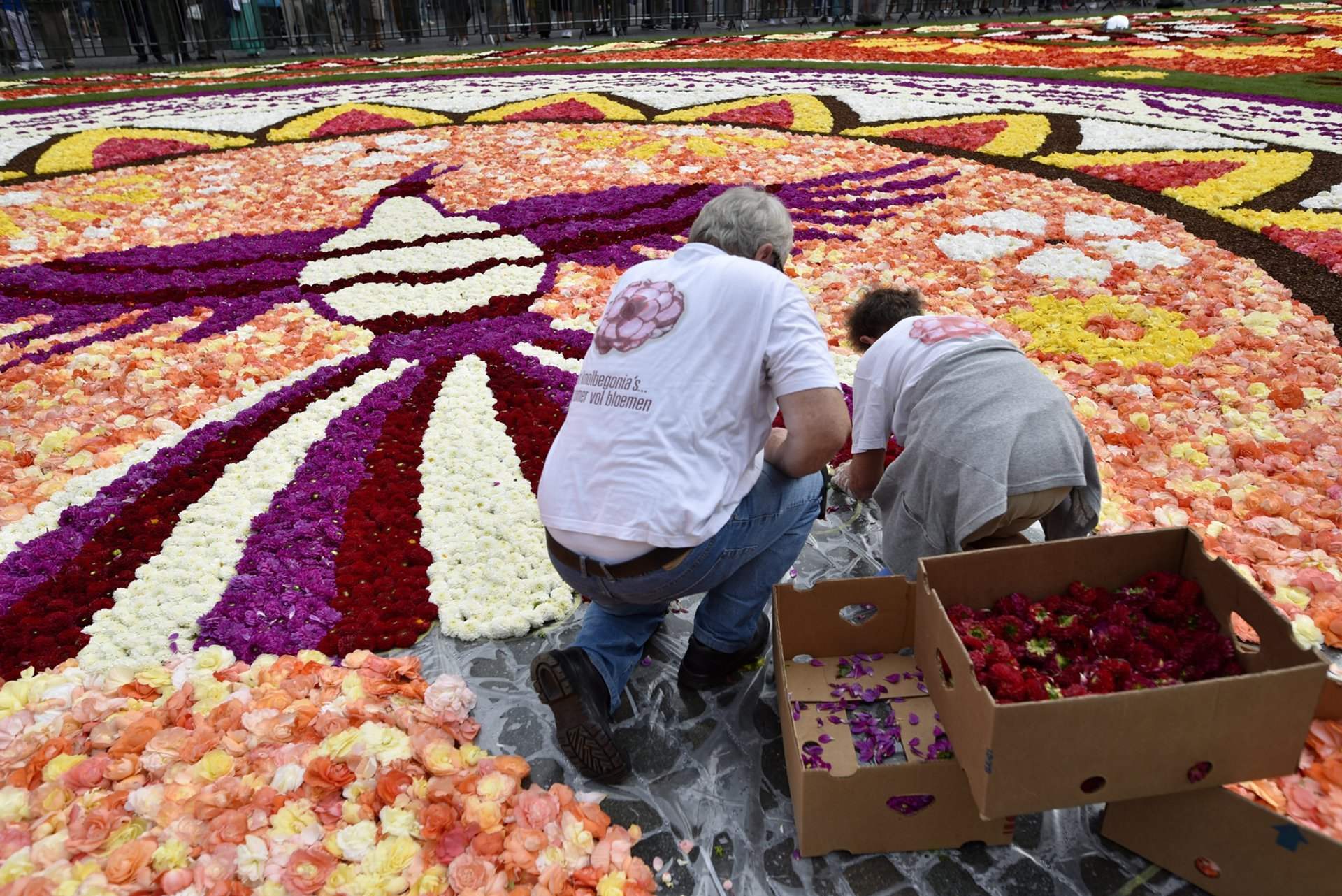 Best time to see Flower Carpet & Flowertime in Brussels 2020