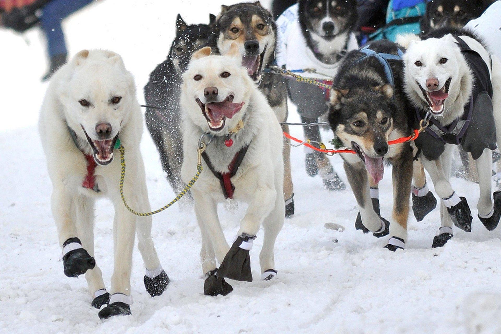 Iditarod Trail Sled Dog Race in Alaska 2020 - Best Time