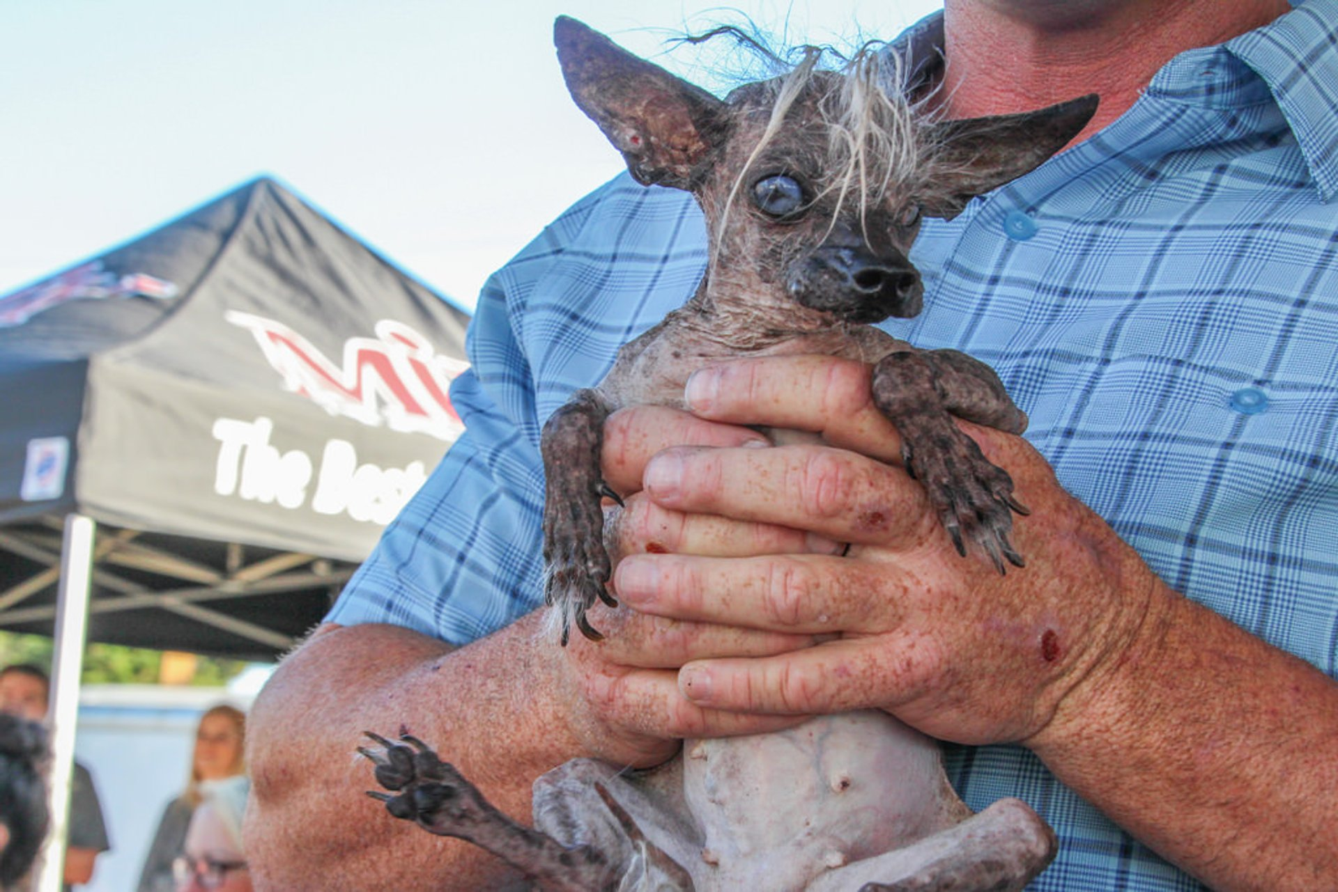 World's Ugliest Dog Contest in California - Best Time