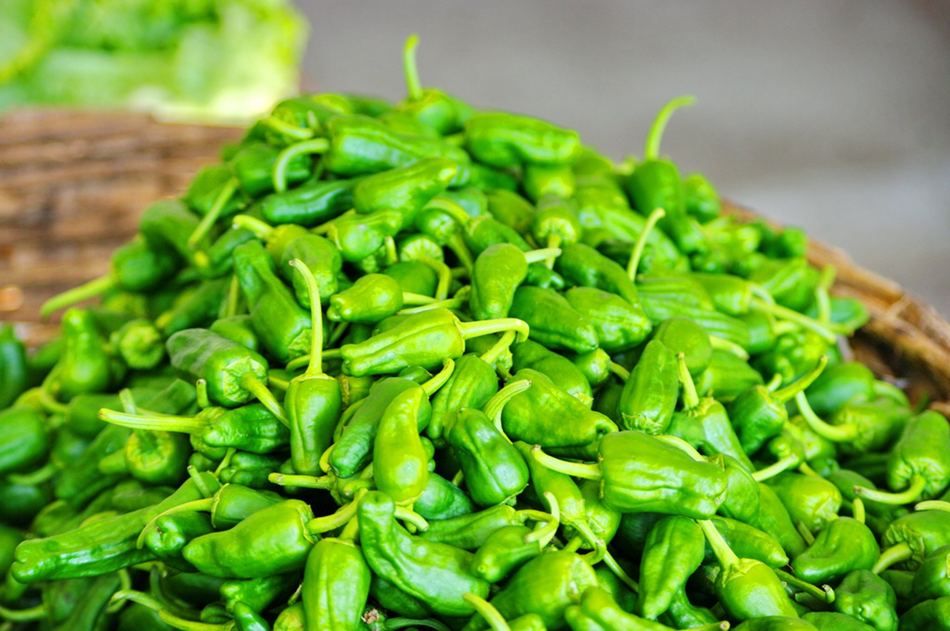 Padrón Peppers (Pimientos de Padrón) in Spain 2019 - Best Time