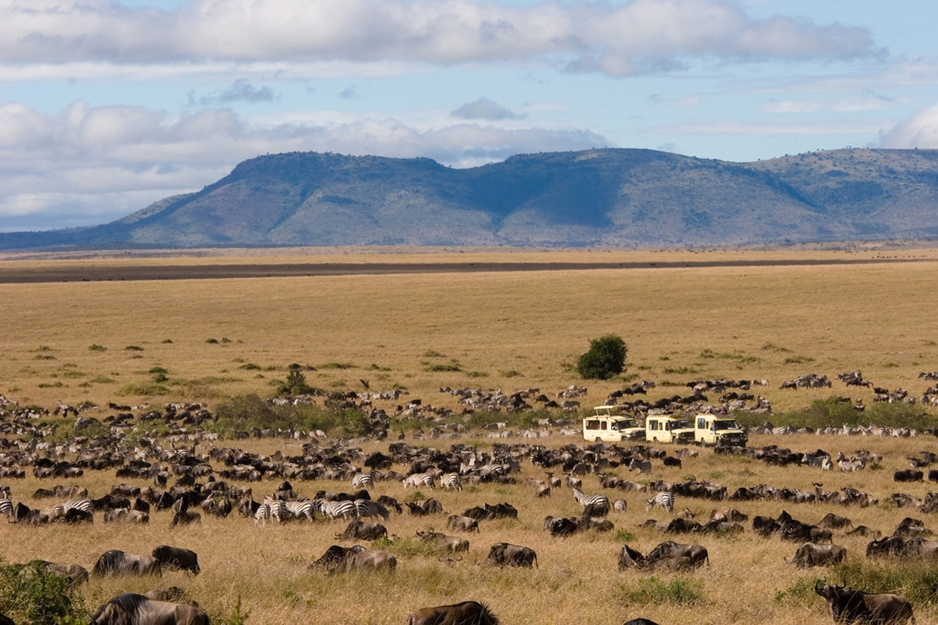 Wildebeest Migration at Mara Game Reserve, Kenya