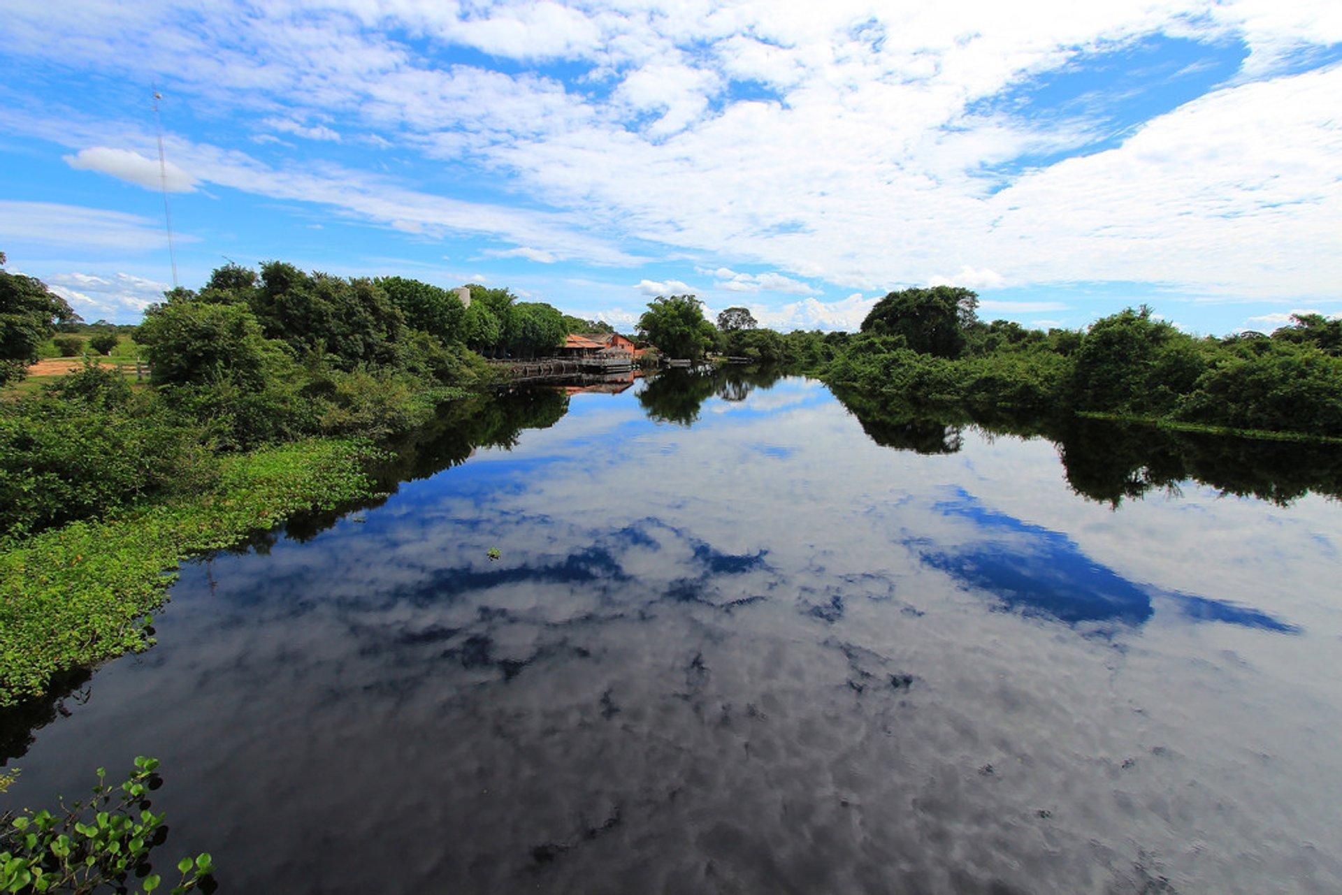Rio Pixaim - Pantanal do Mato Grosso 2020