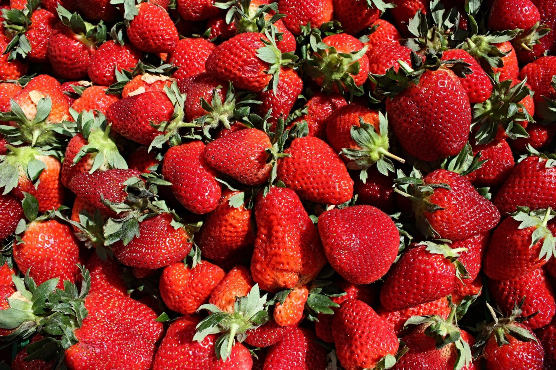 Ponchatoula Strawberry Festival in Louisiana 2020 - Best Time