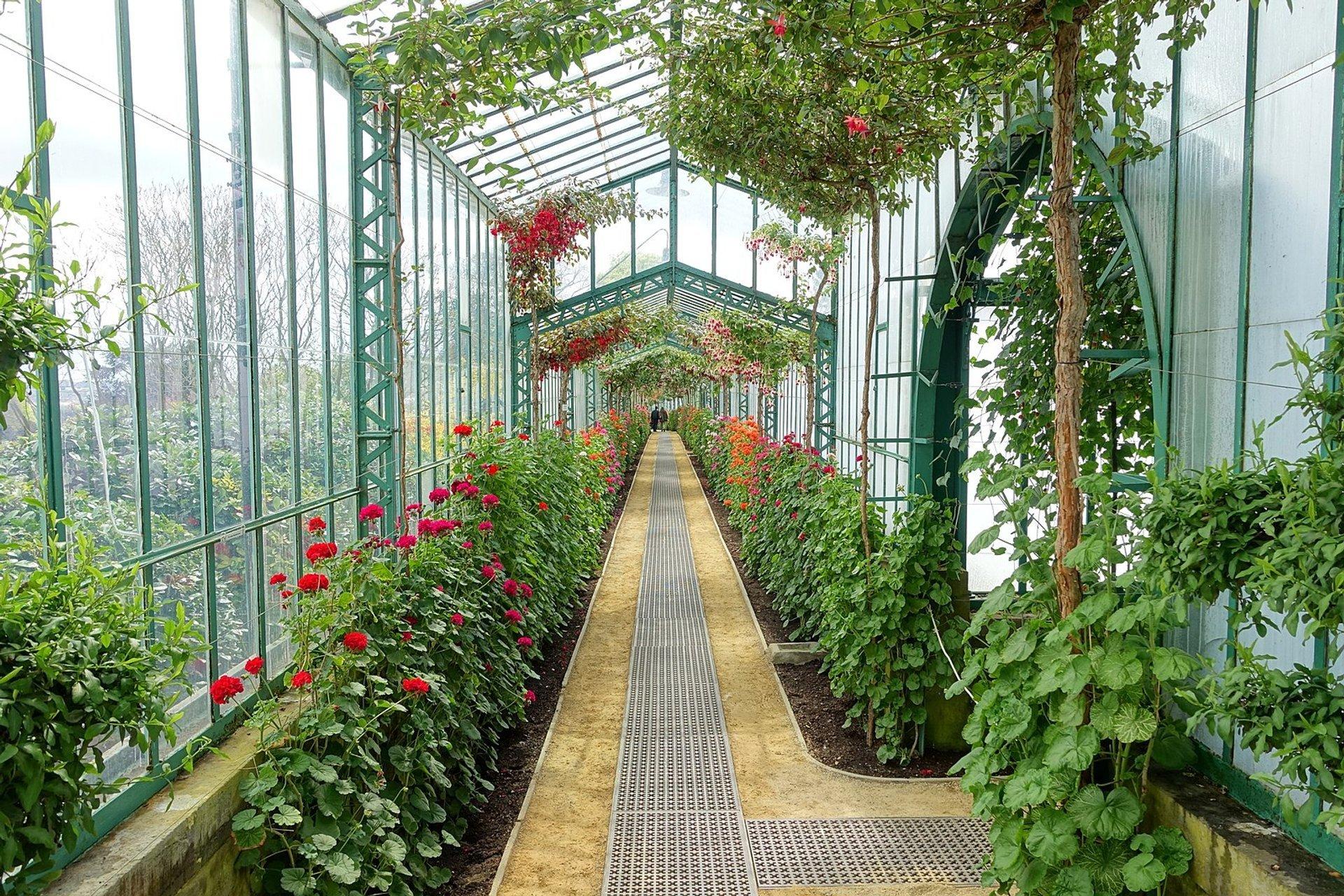 Royal Greenhouses of Laeken in Brussels 2020 - Best Time