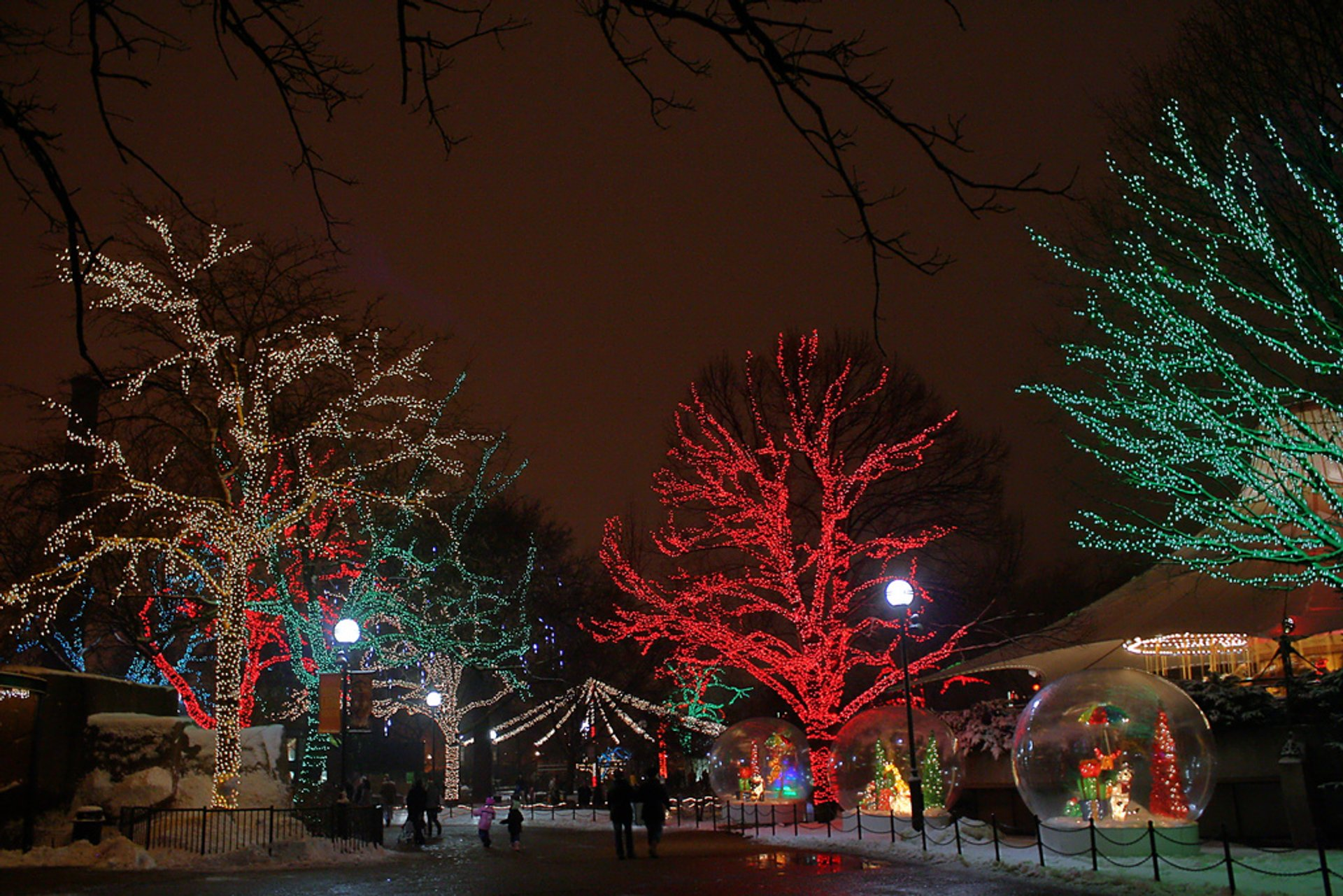 Best time to see ZooLights in Chicago 2020