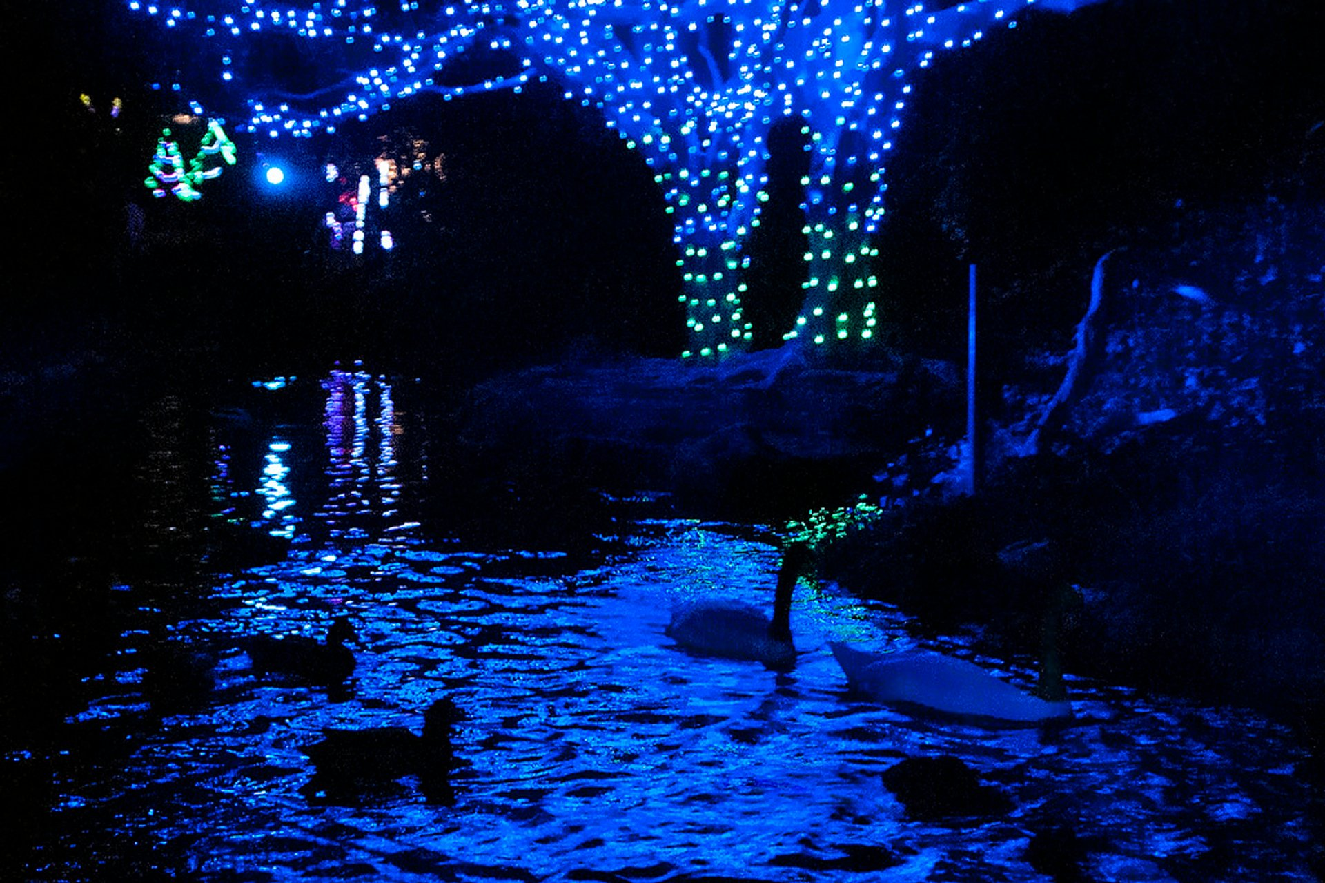 Swan pond at the L.A. Zoo, illuminated for the holidays. 2020