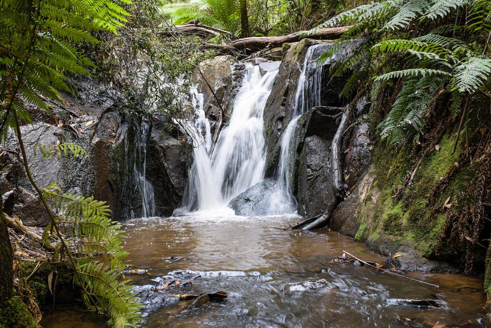 Olinda Falls 2020