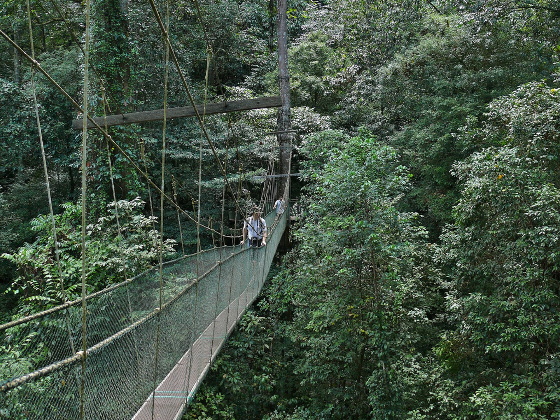Canopy Walks in Borneo in Malaysia 2019 - Best Time