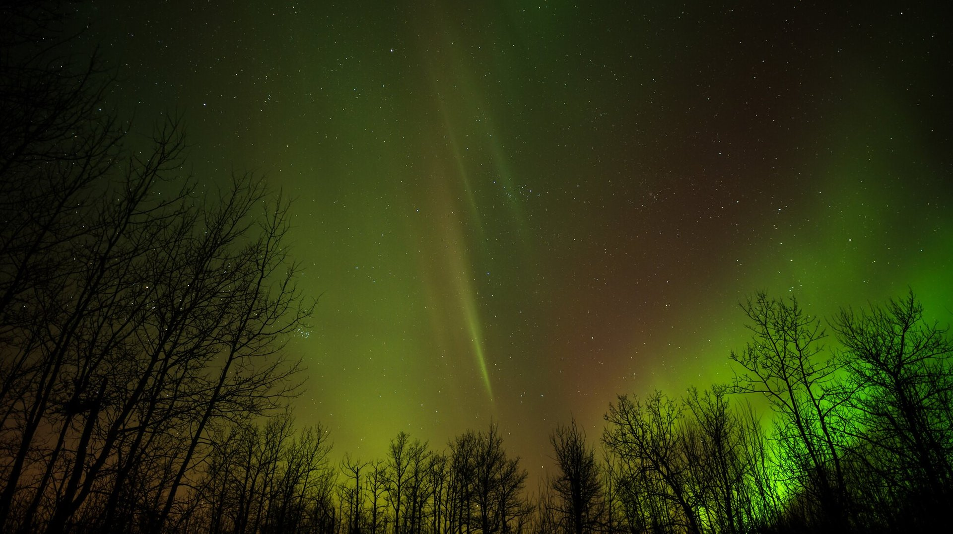 Northern Lights, Elk Island, Alberta 2020