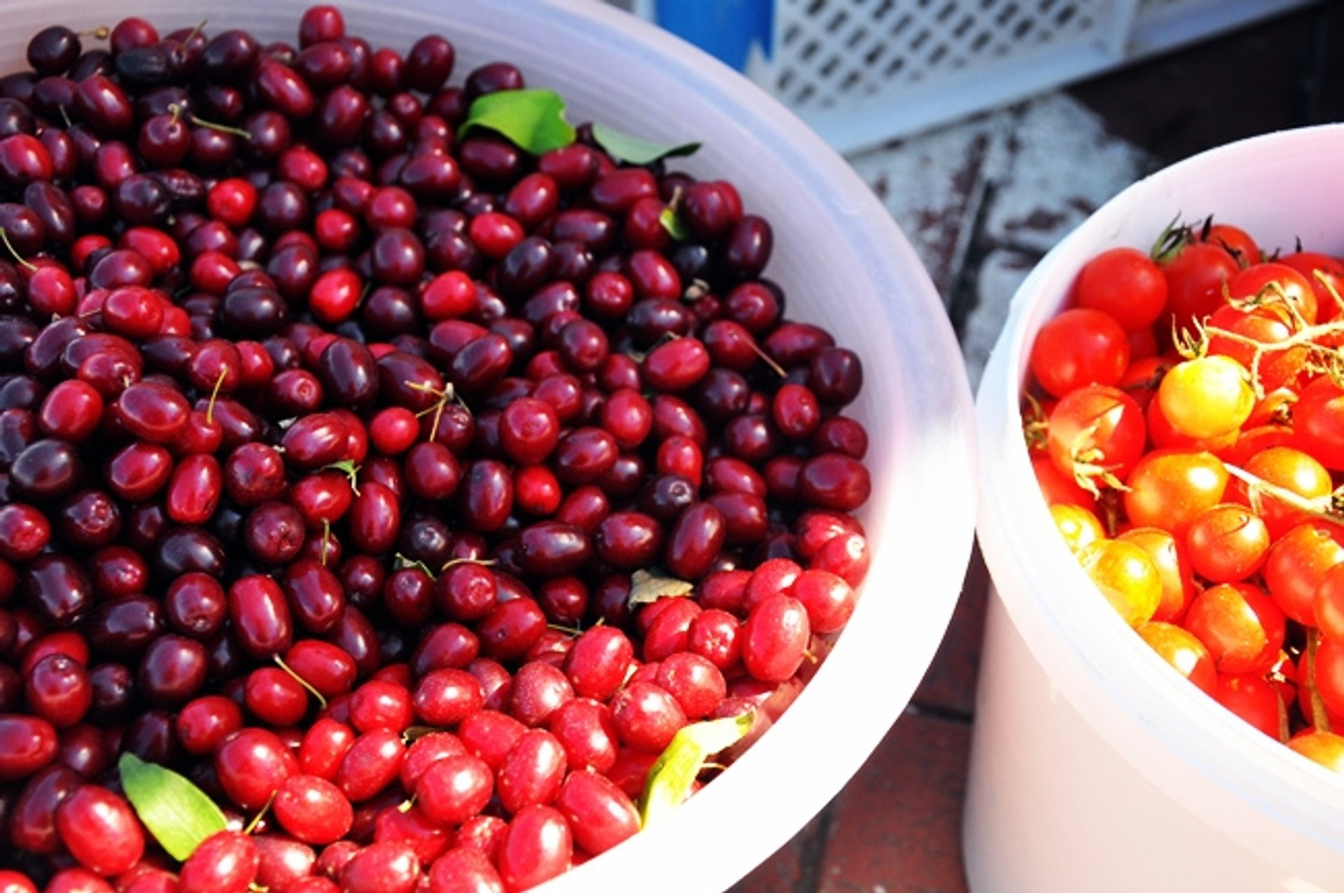 Best time to see Cornelian Cherries or Drenjine in Montenegro 2020