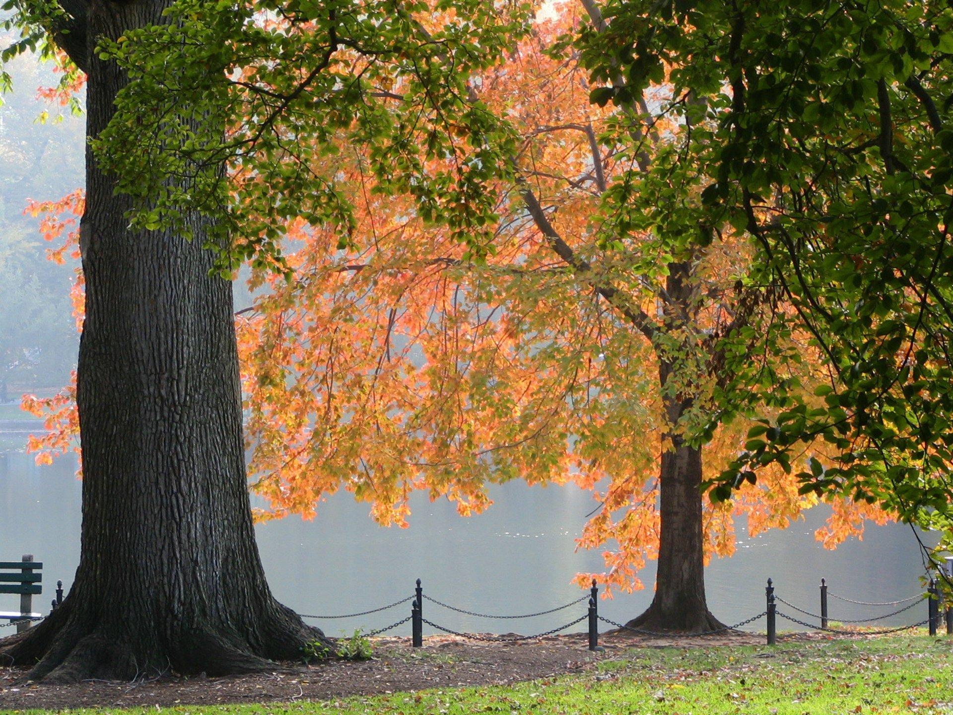 Charles River foliage, Boston 2020