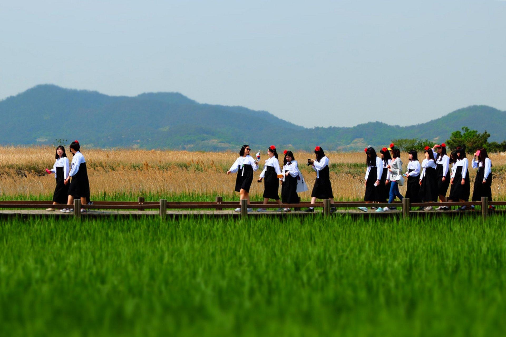 Schoolgirls parade over reeds in Suncheon Bay, South Korea 2020