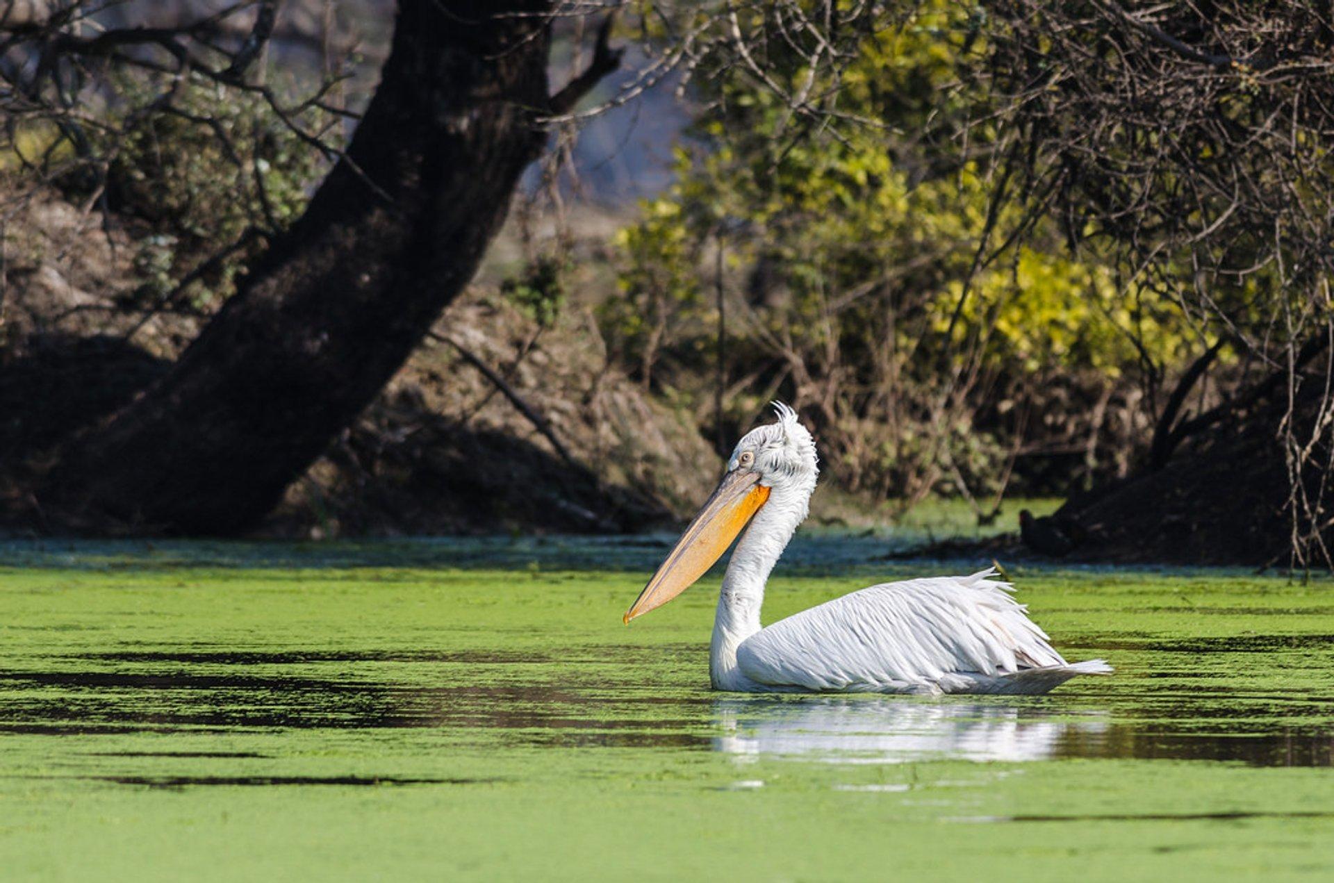 Chambal River Safari in Taj Mahal and Agra  2020 - Best Time